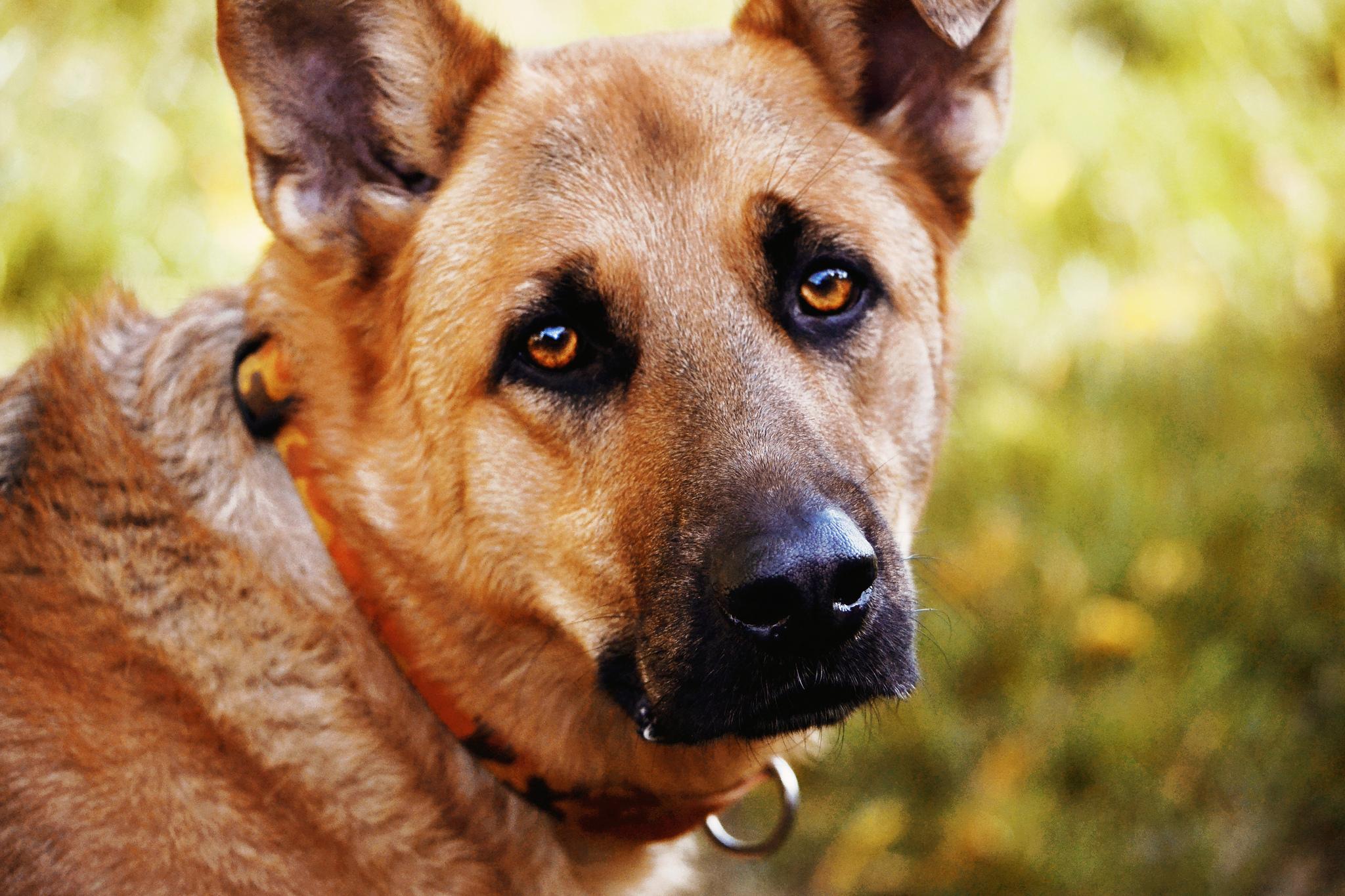 самые лучшие картинки с собаками небольшая