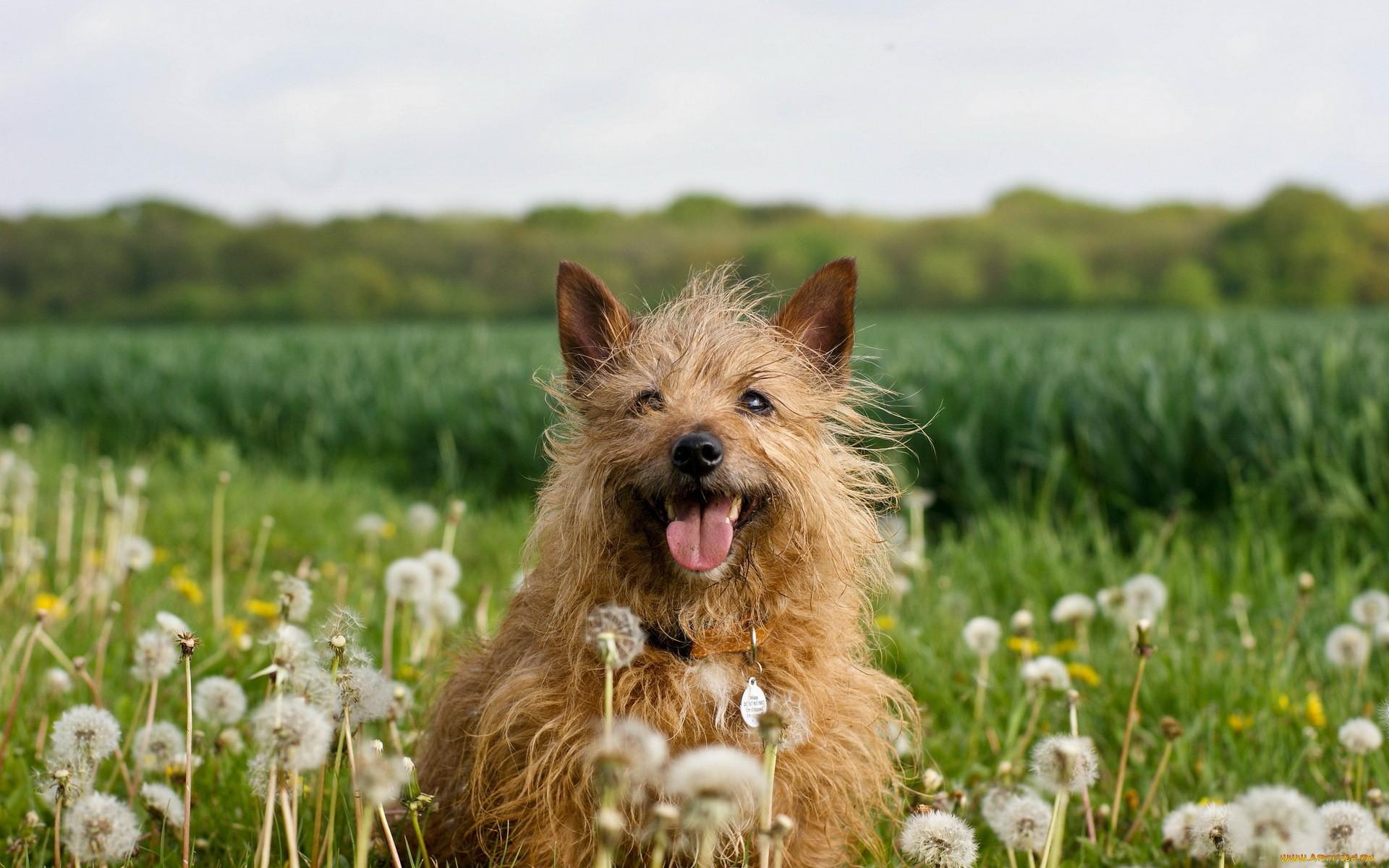 Летние картинки собак