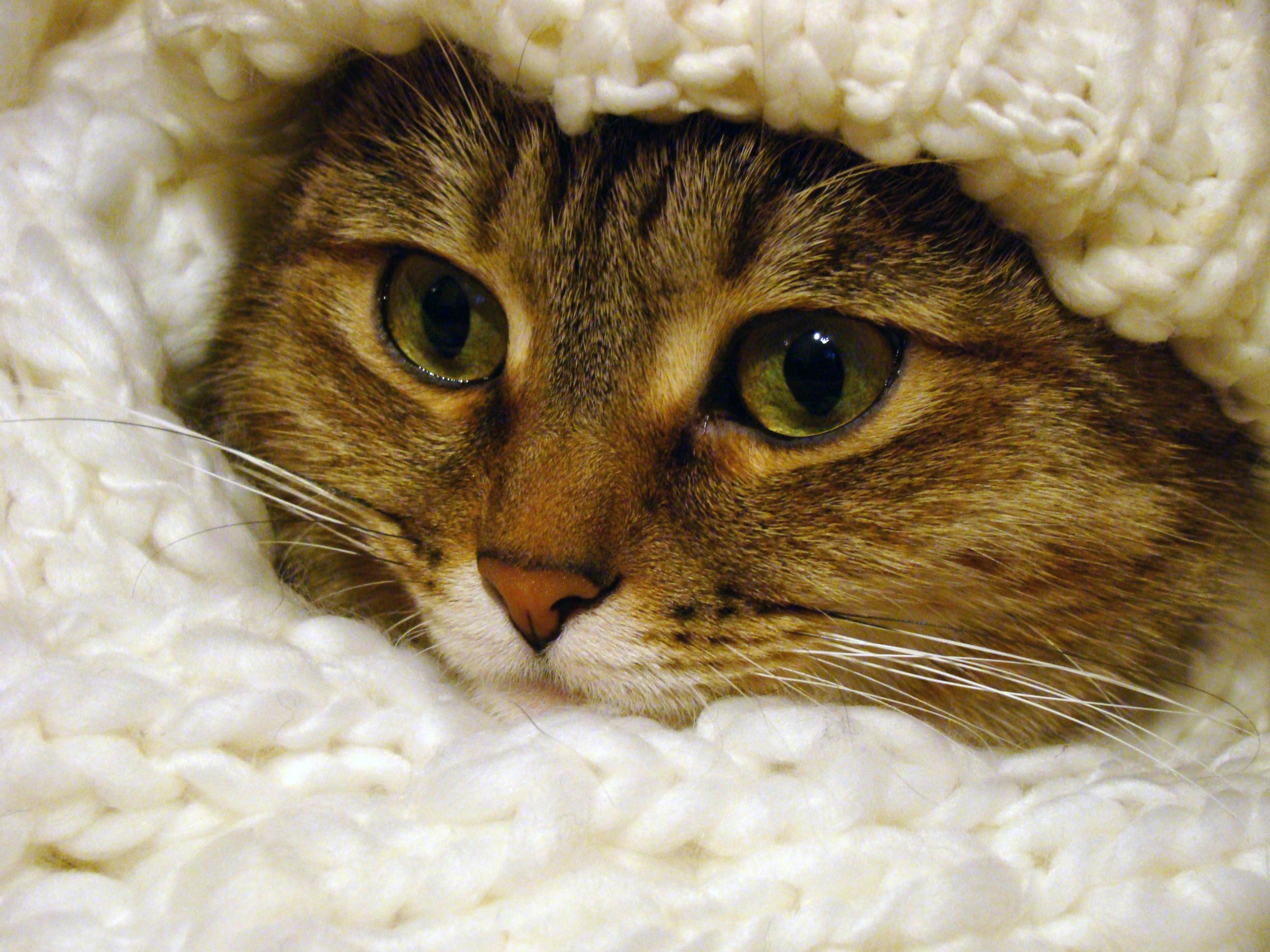 тнт картинки прикольные кошки большое разрешение пугает