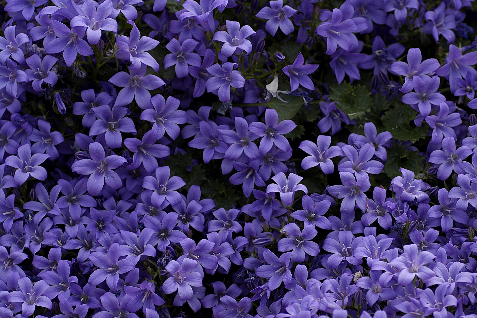 Красивые картинки мелких цветов