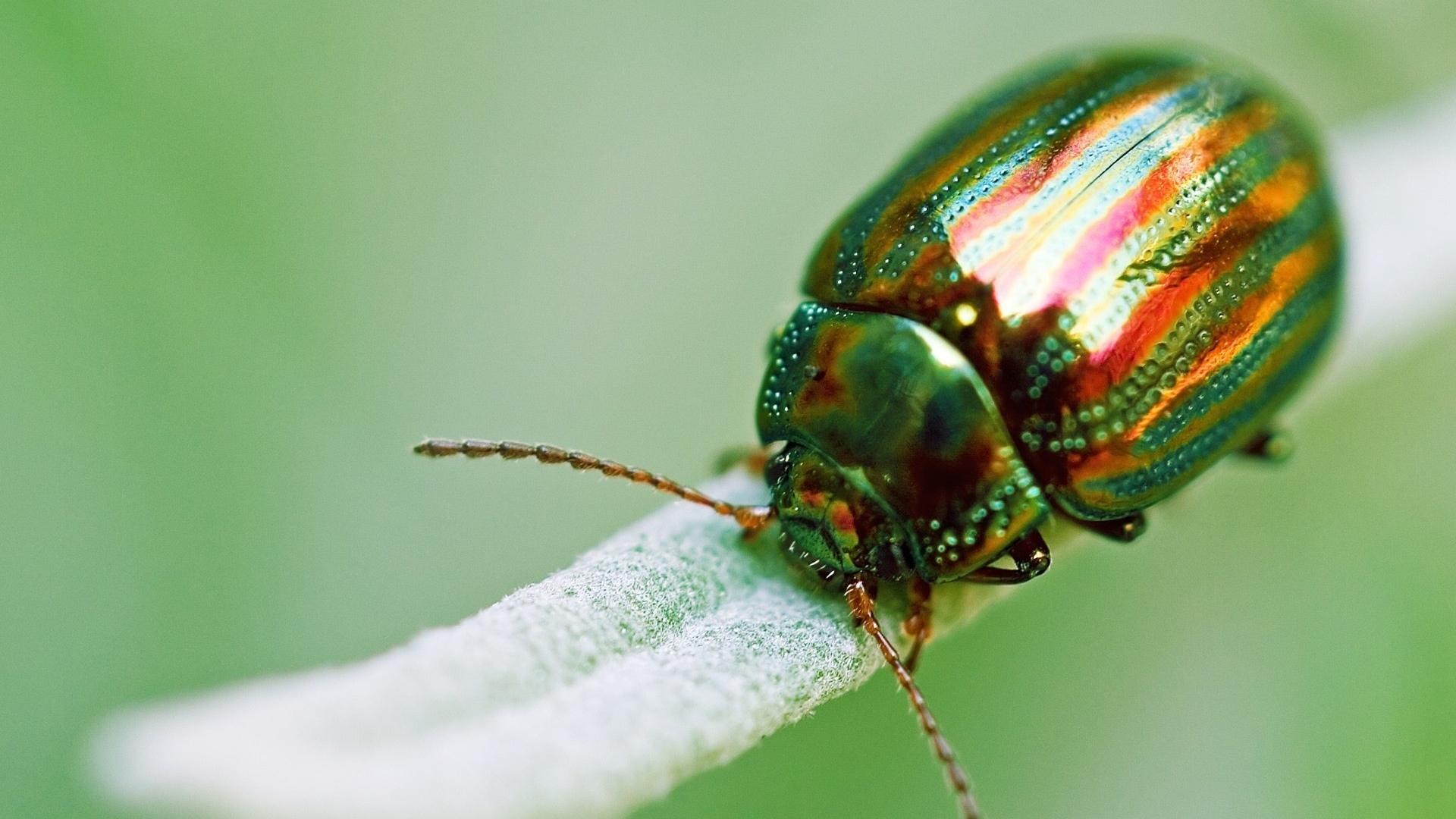 сегодня угостить картинки с красивыми жуками даже ему