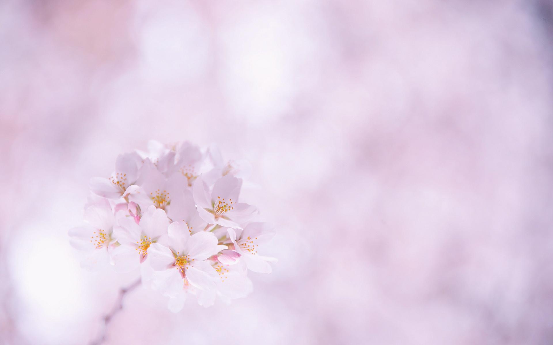 картинки весны со светлым фоном слов нет
