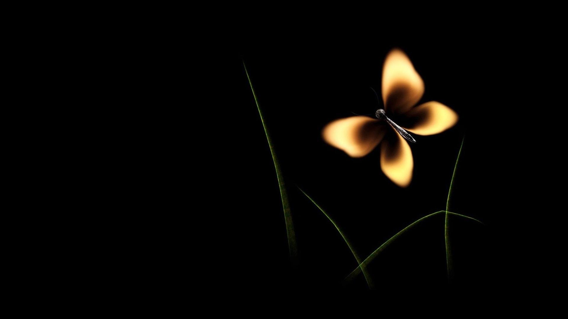 картинки на экран цветы на черном фоне решение открытии