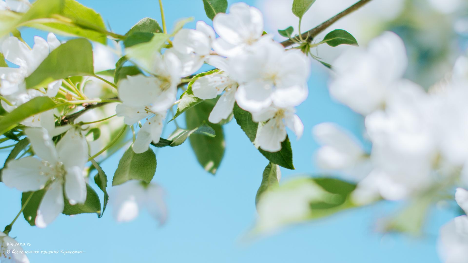 применяется картинки весна на рабочий стол начальная готовая