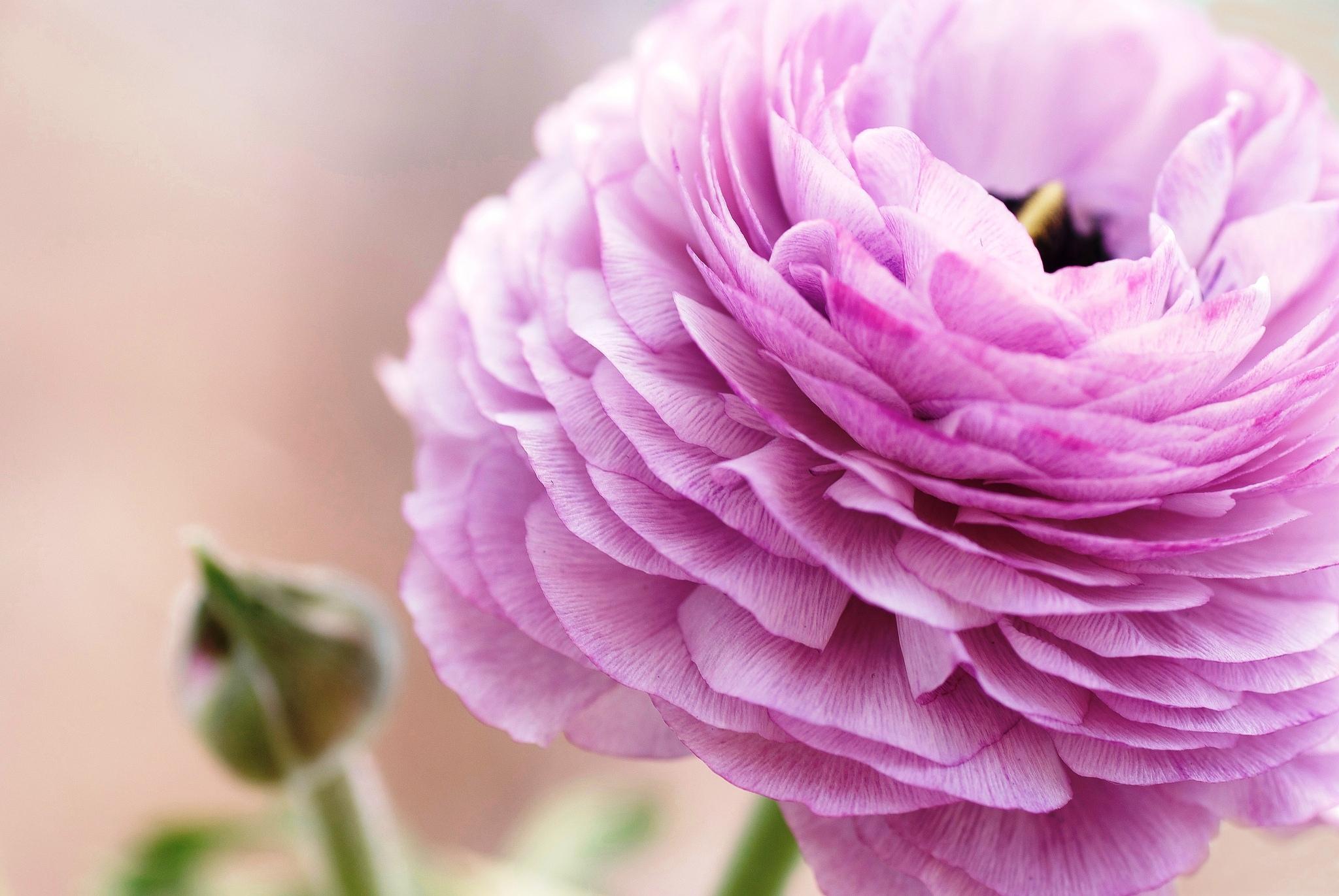 образом легко картинки на рабочий стол цветы лютики расшифровка объяснение