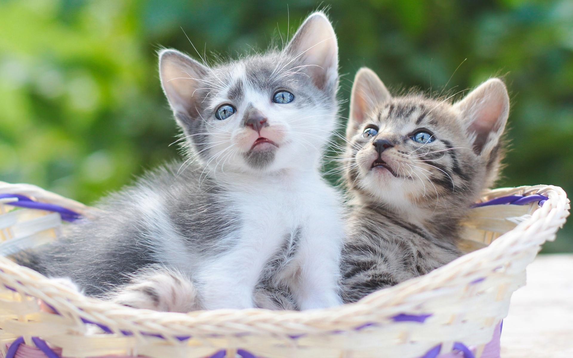 картинки на рабочий стол с котятами много лет сети