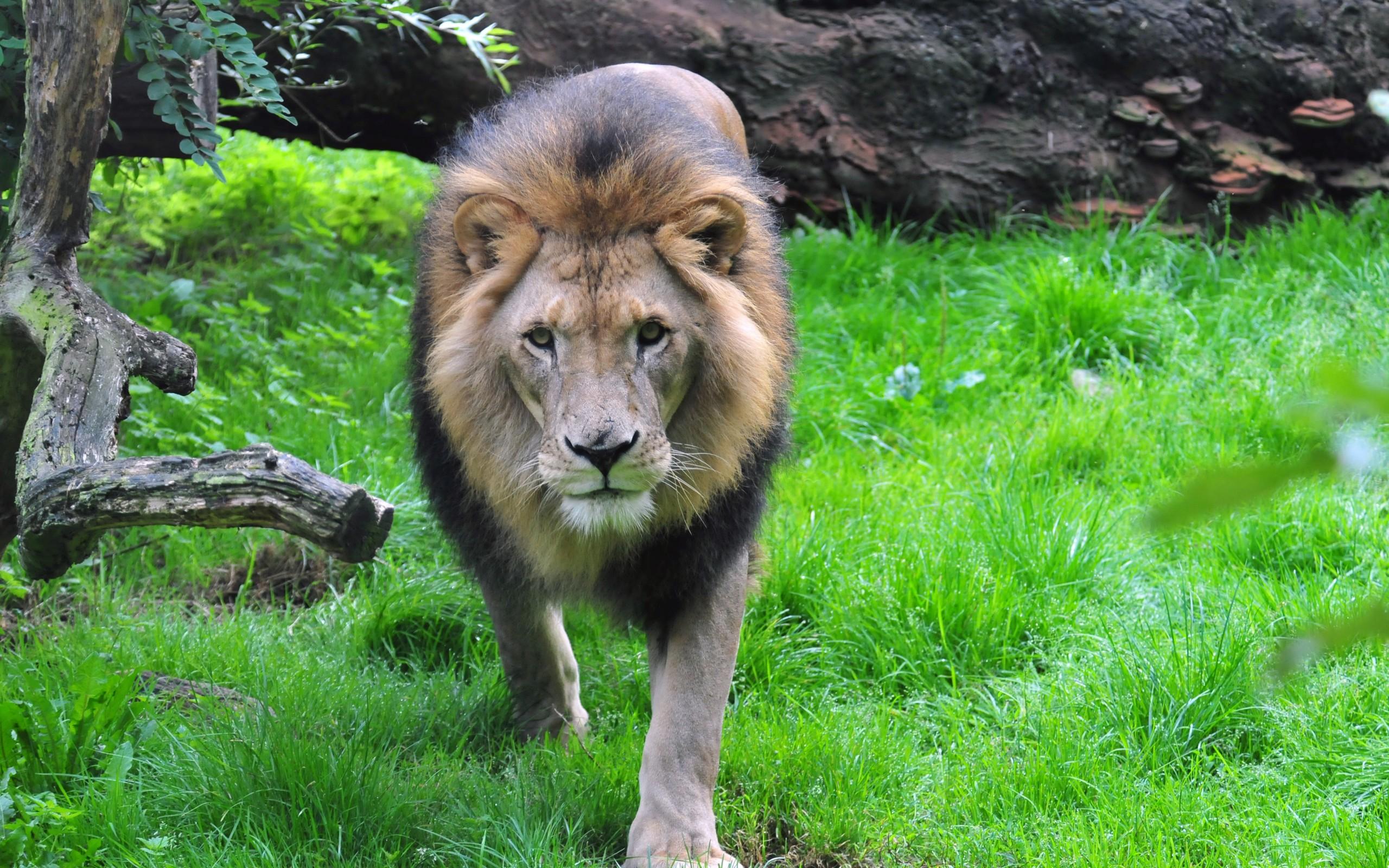 крупные картинки с дикими животными просто кладезь