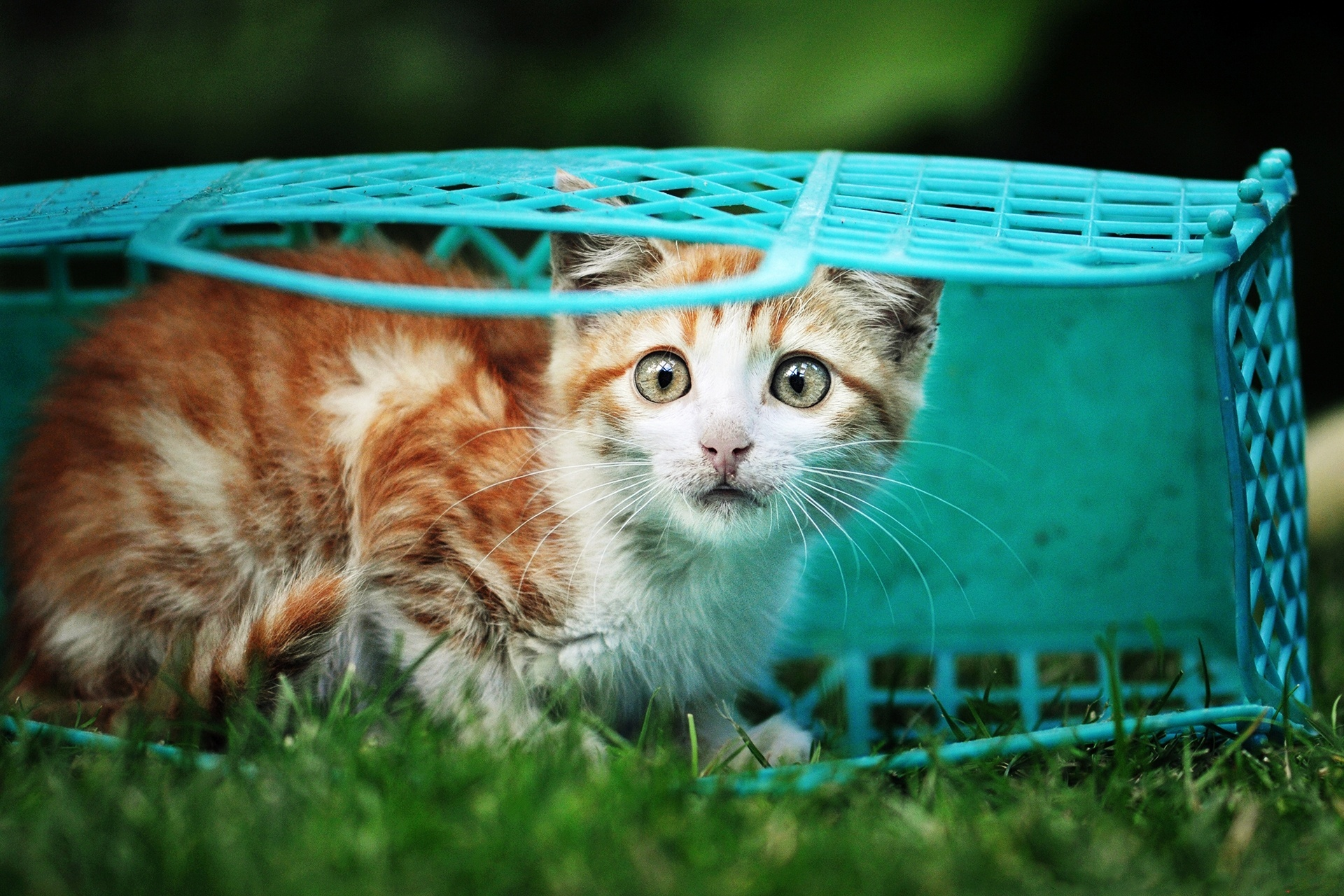 Картинка напуганный котенок