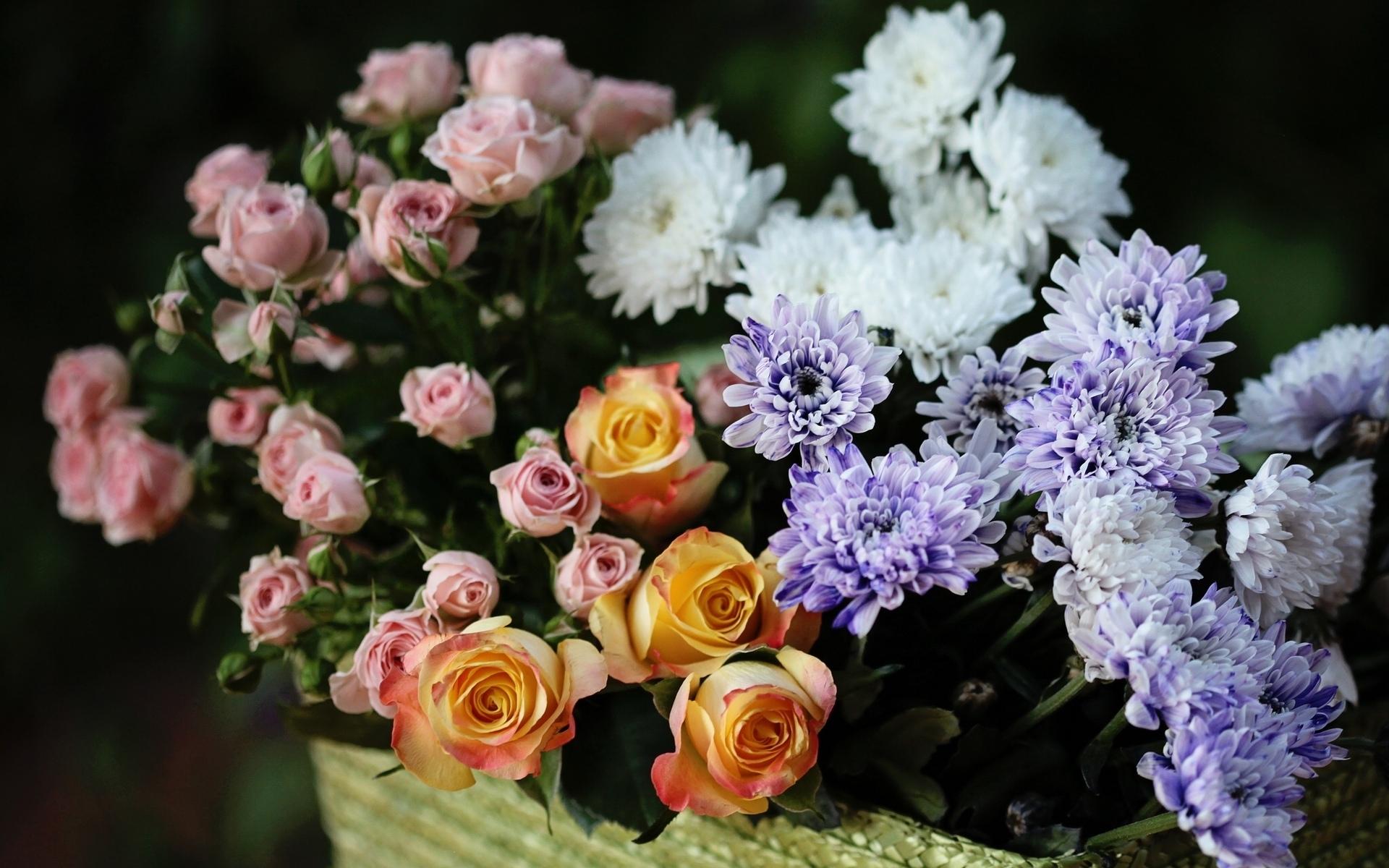 картинки на рабочий стол хризантемы букет новом