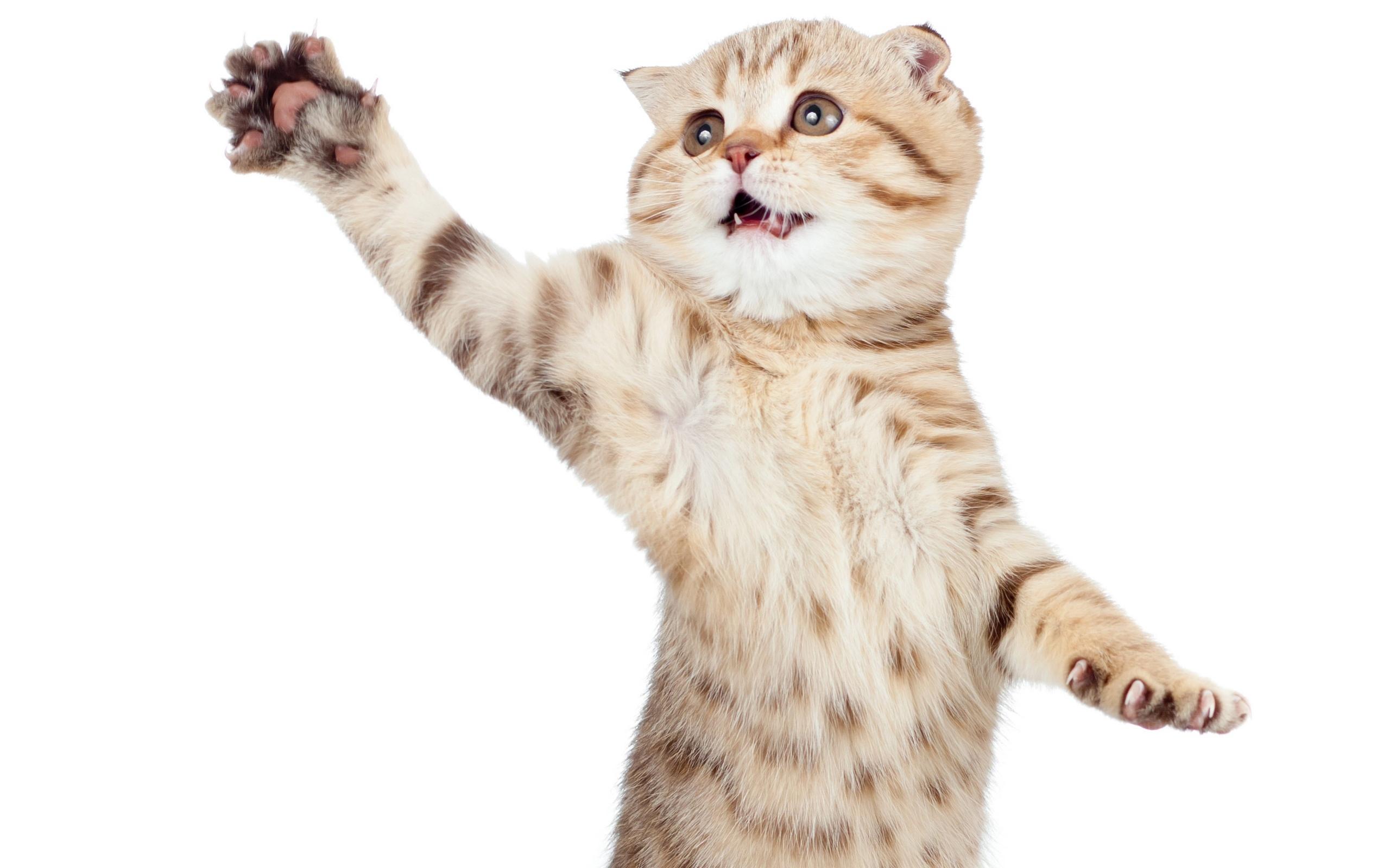 картинки котенок машет стандартная