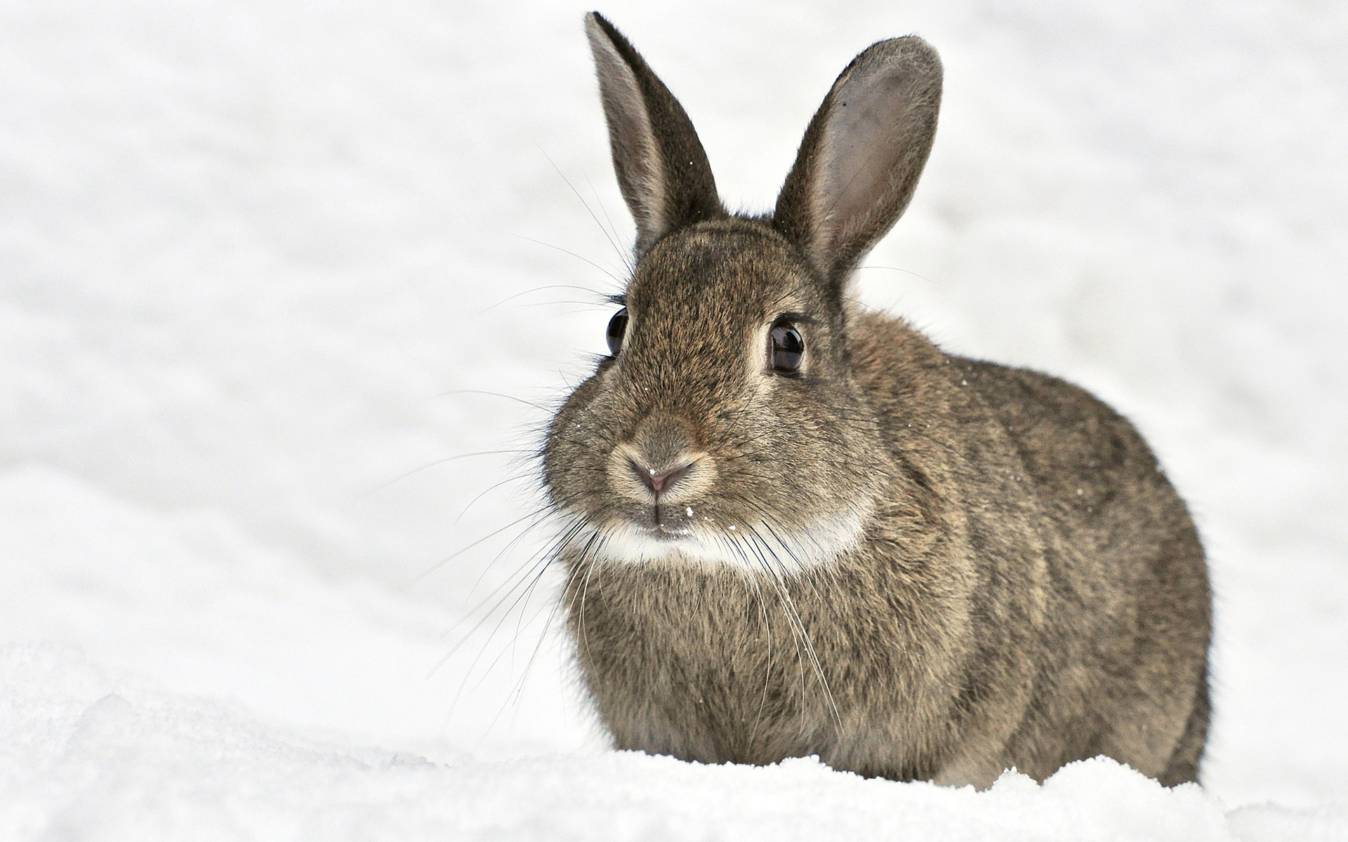 светлые красивые картинки заяц на снегу здоровье будет