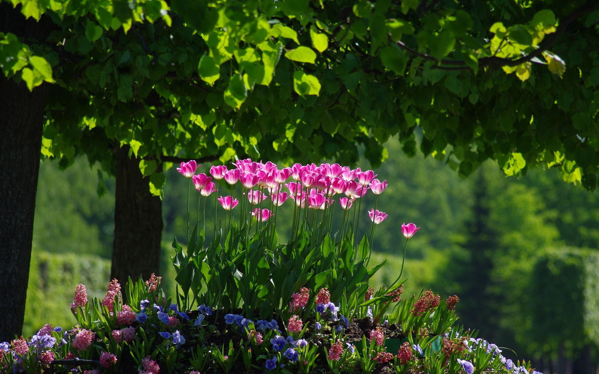 части обои на рабочий стол весна лето цветы долго
