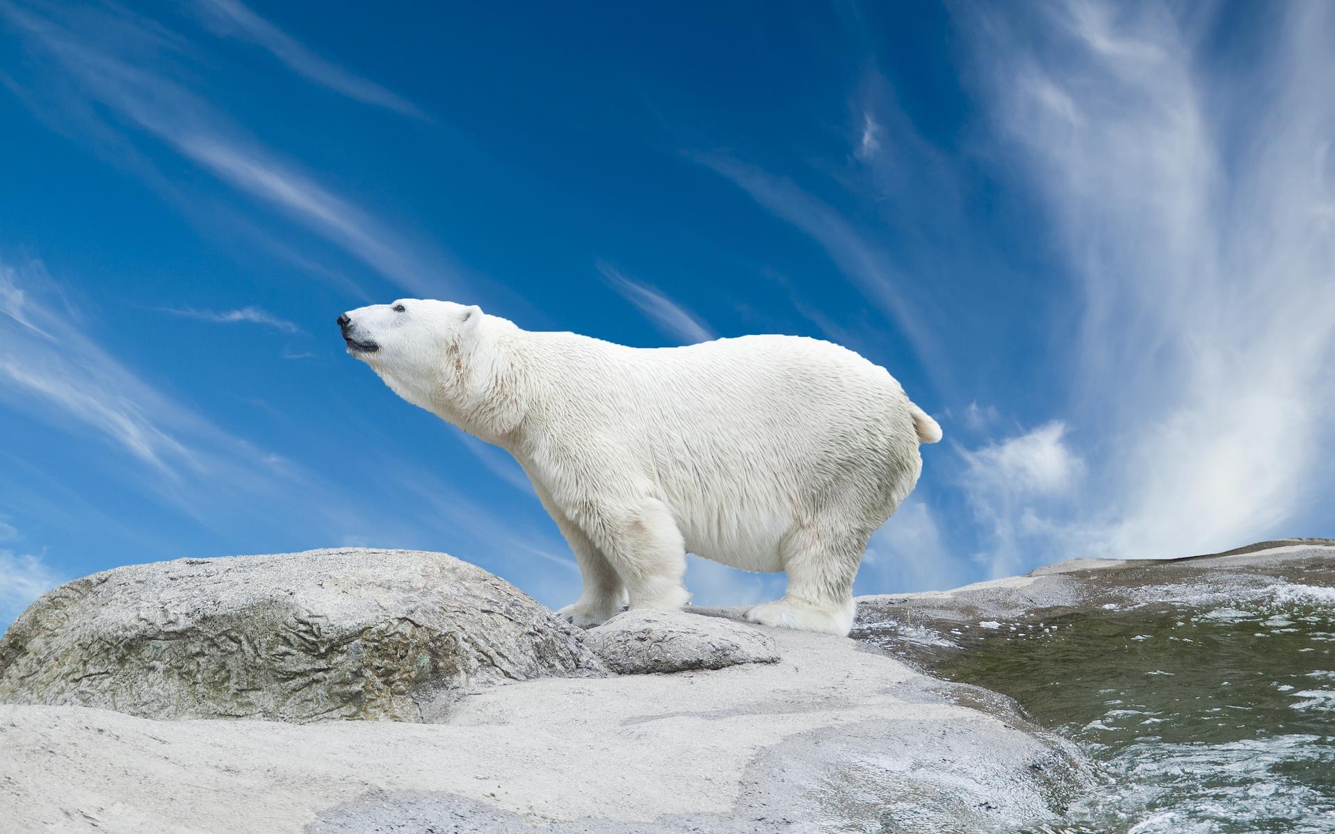 Медведь на севере картинки