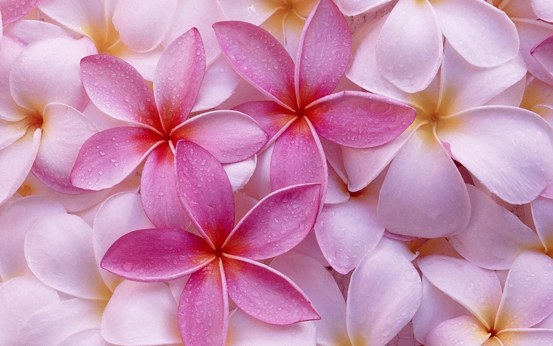 Красивые картинки цветов розовых