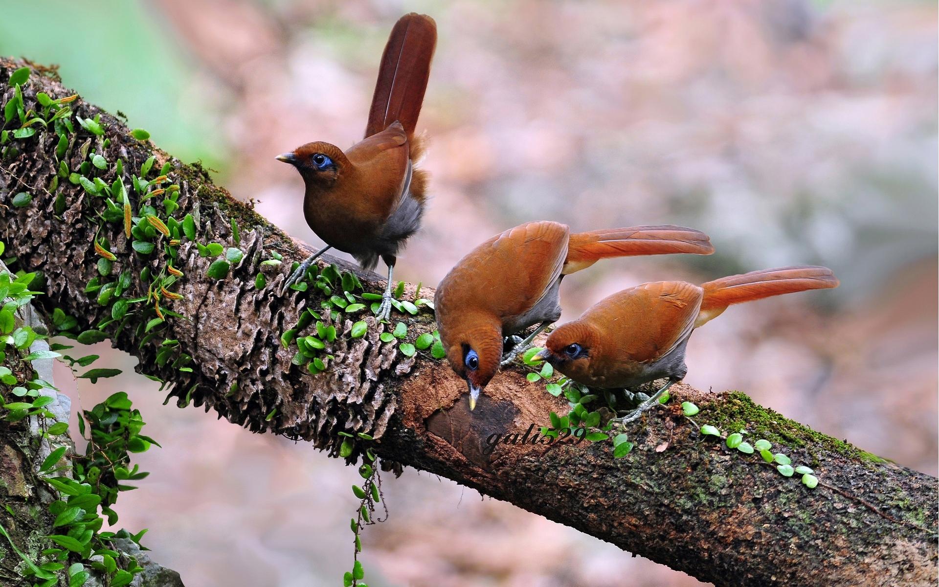 картинки с лесными птичками легкого