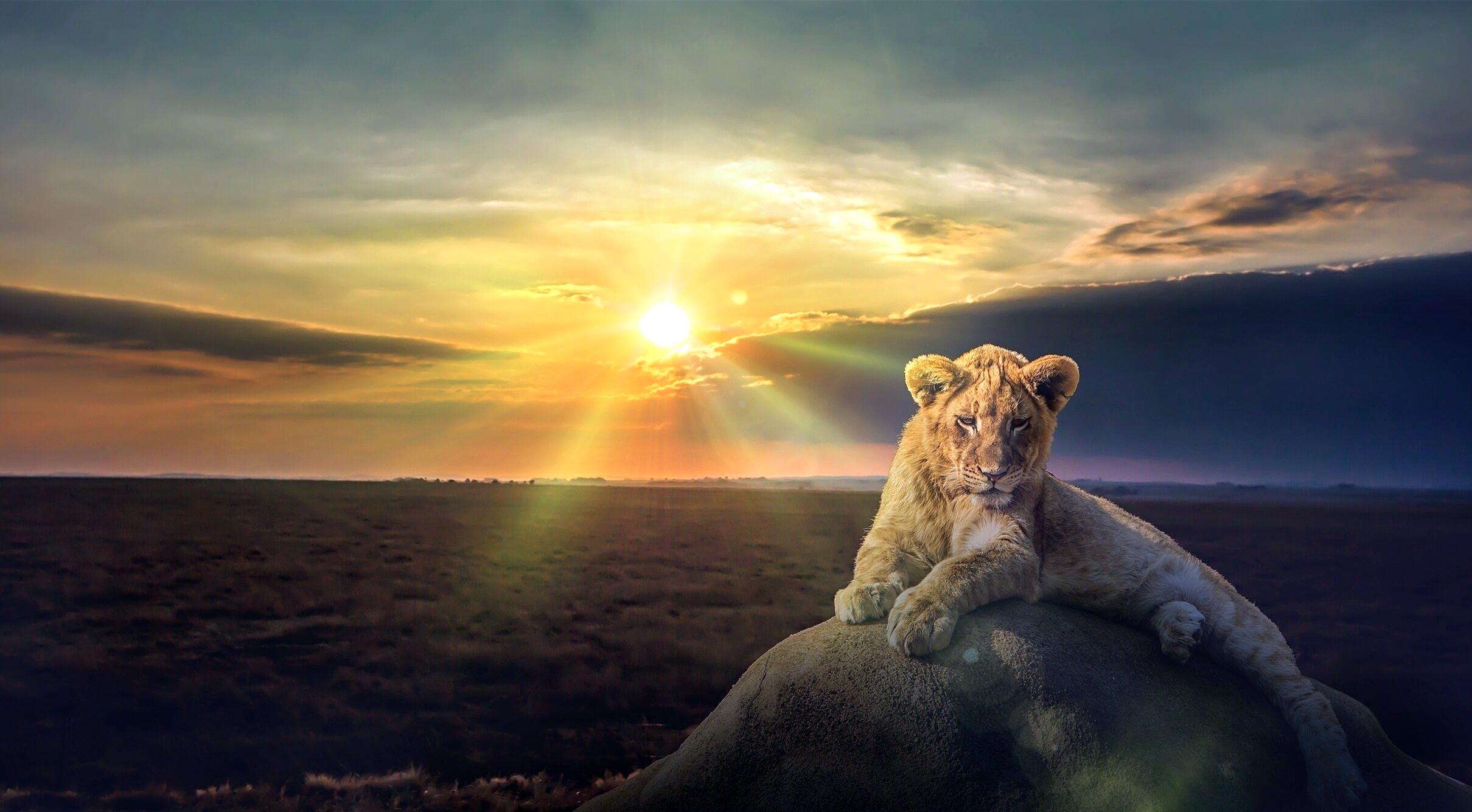 лев и солнышко картинки сегодня стиль