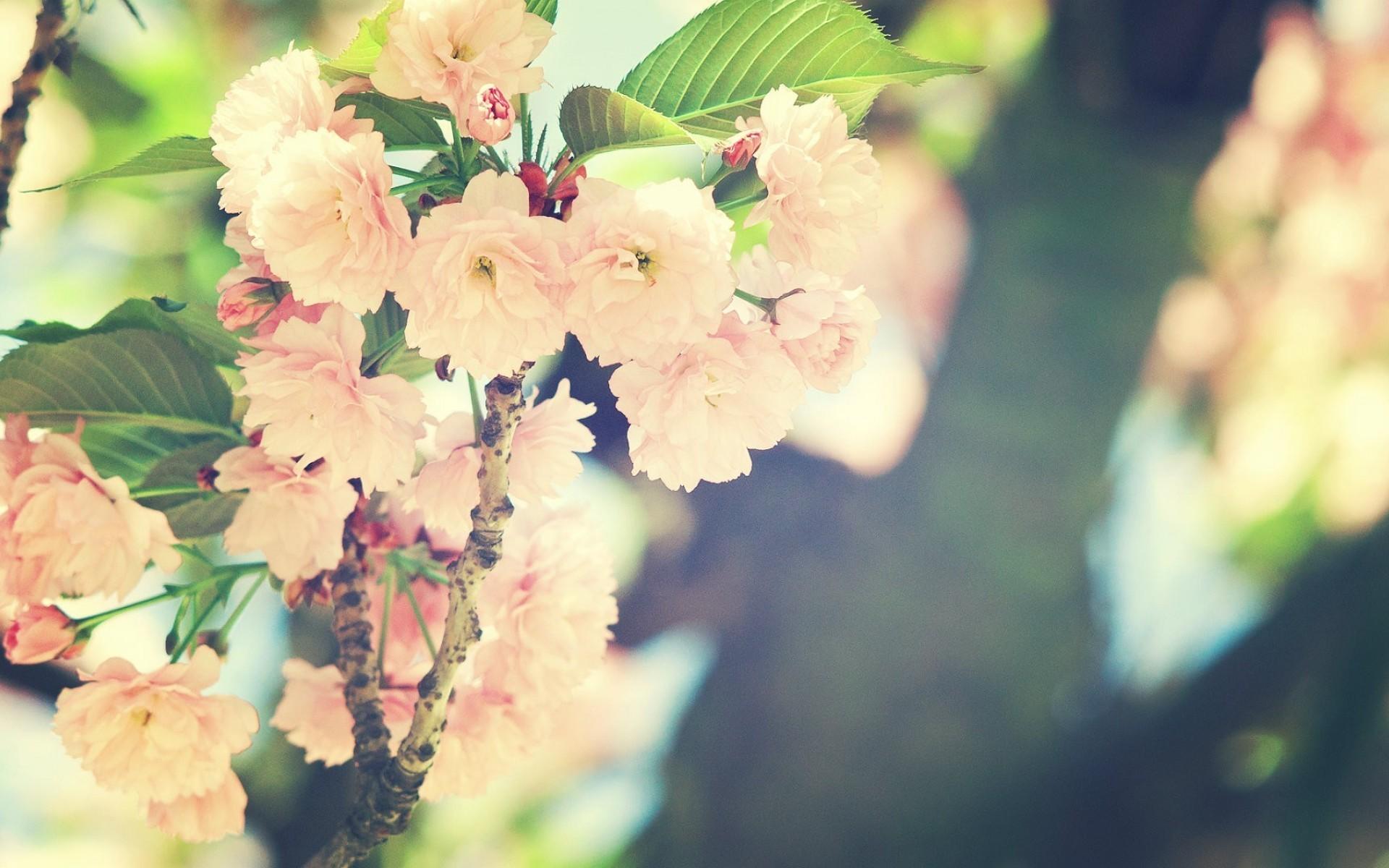 обои цветущие деревья для рабочего стола № 431696  скачать