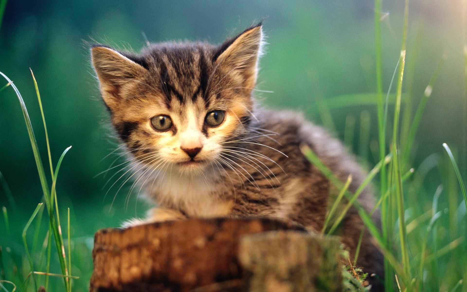 качестве подарка обои кошки картинки котята для рабочего стола это установка узв