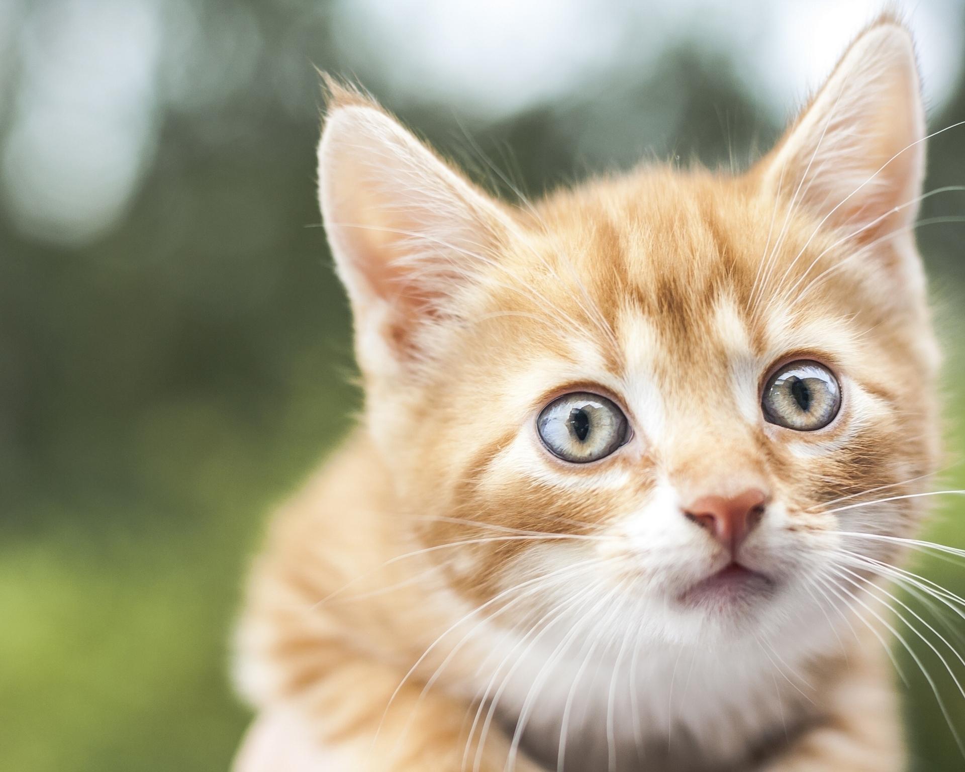 картинки мордашки кошечки высокого уровня