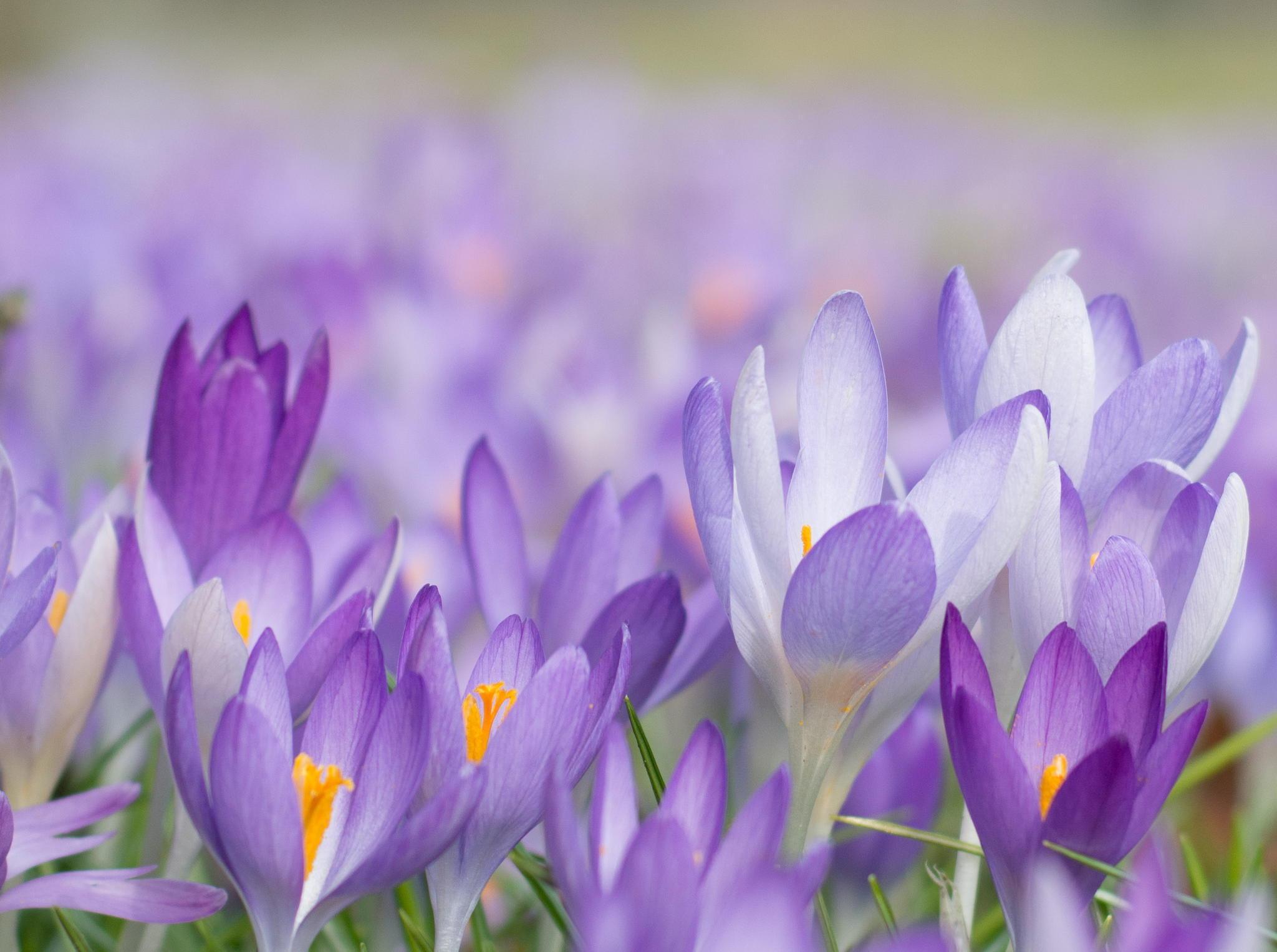 Цветы весной фото на рабочий стол большие модель