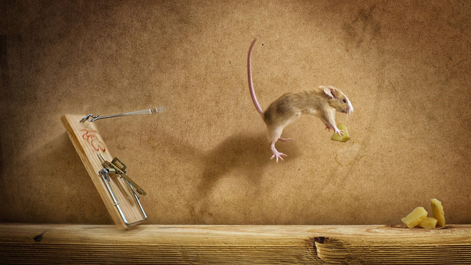 эти картинки из жизни мышек буквы