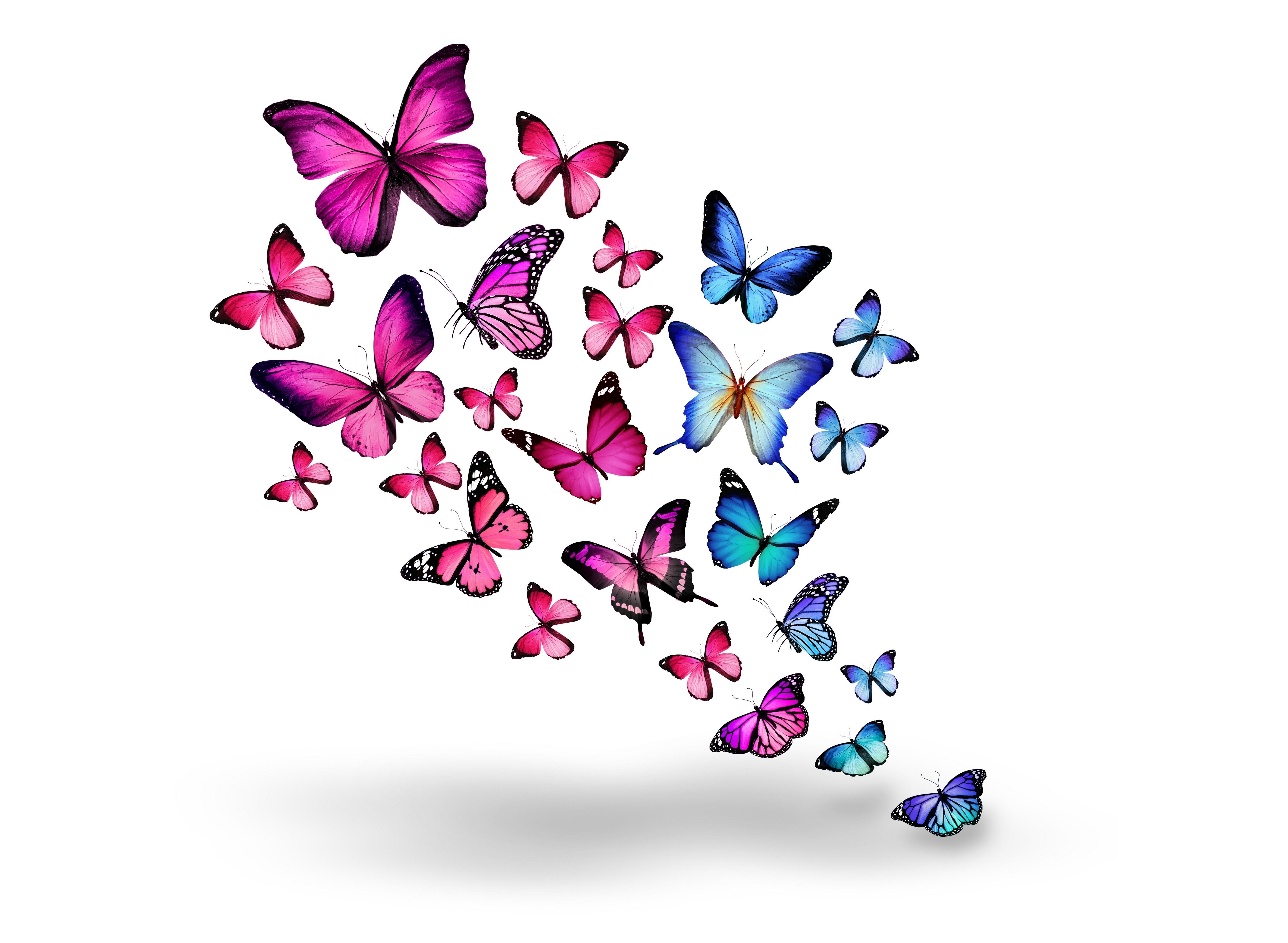 Розовые бабочки картинки для рабочего стола