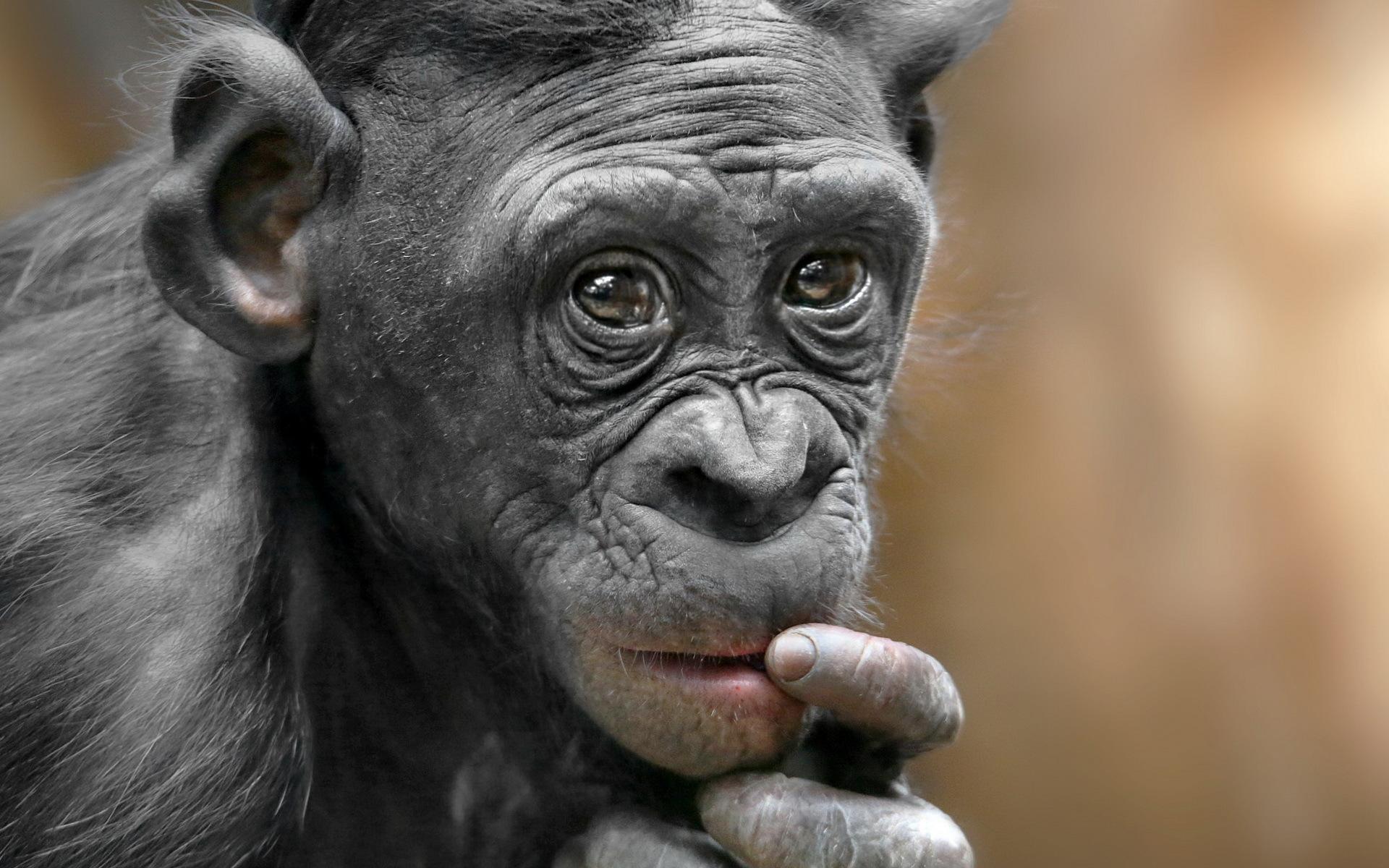 смешные обезьяны картинки фото отправился метро