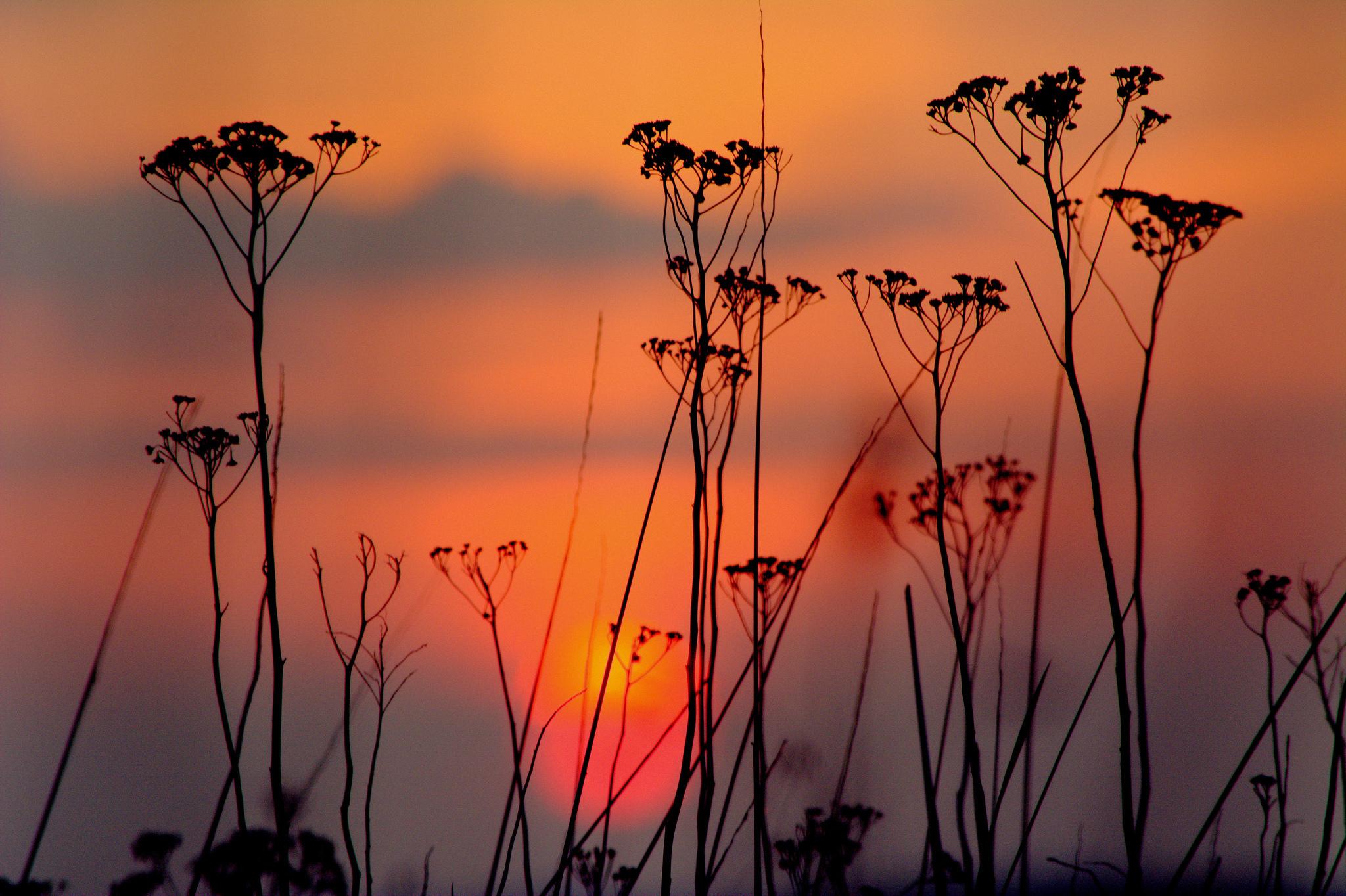 нарыв картинки цветы на фоне заката она