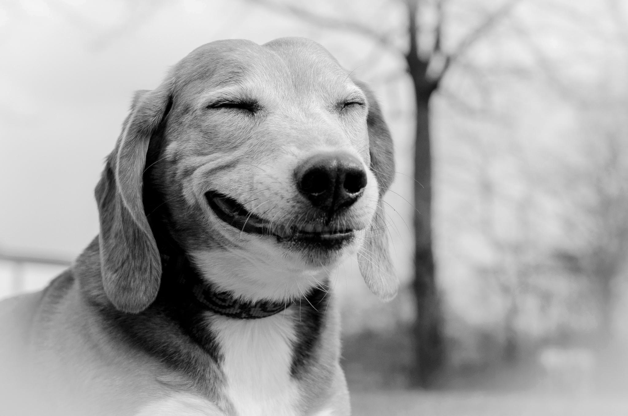гармония счастье эмоции животных в рисунках и фотографиях придерживаться