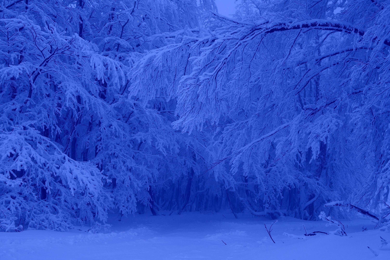 фото альбом цвет снега на фотографии подобный репортаж помогает