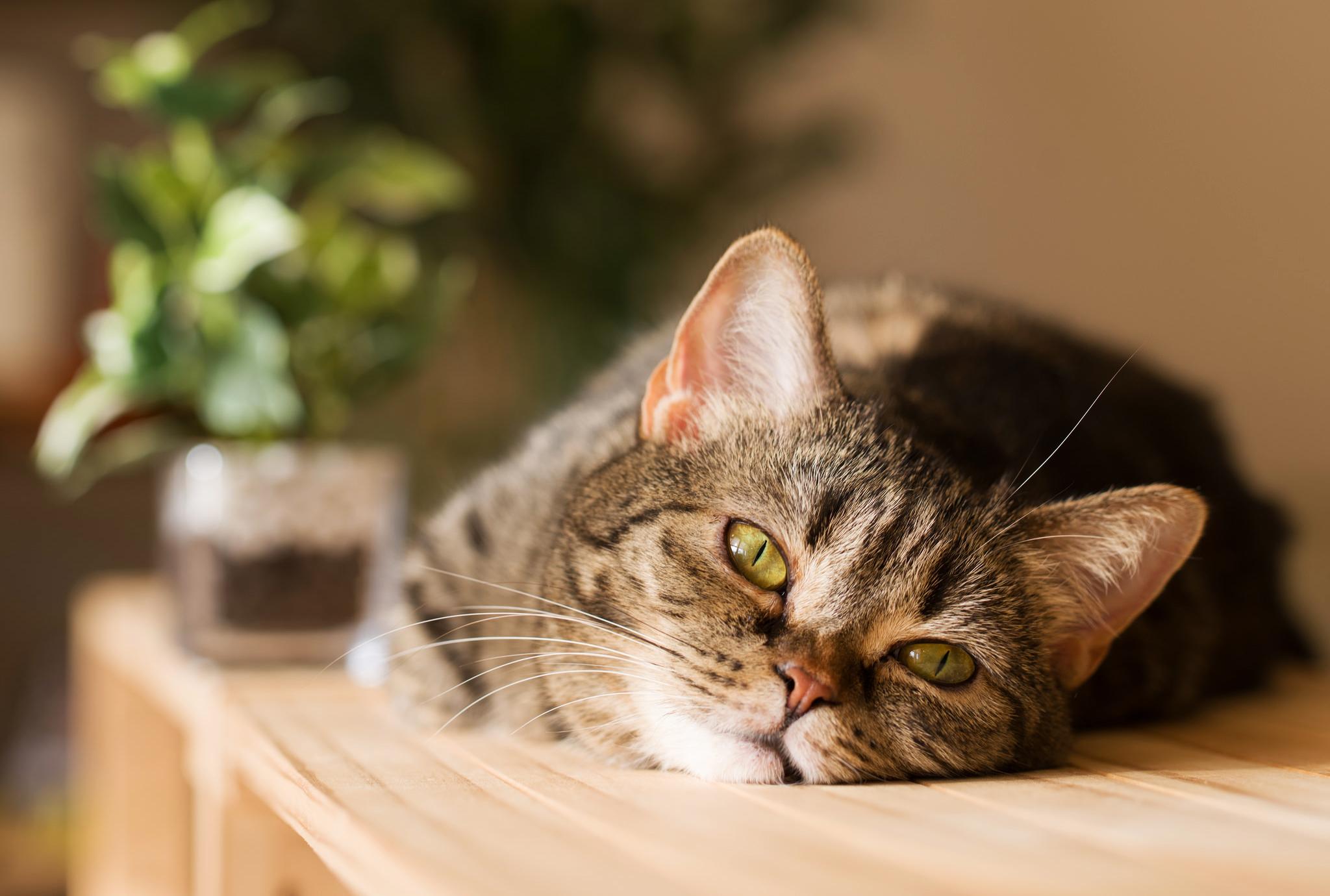 Кошки обои и картинки на рабочий вашим