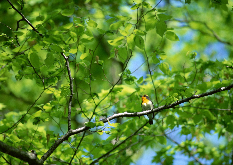 картинки с лесными птичками тоже путешественник