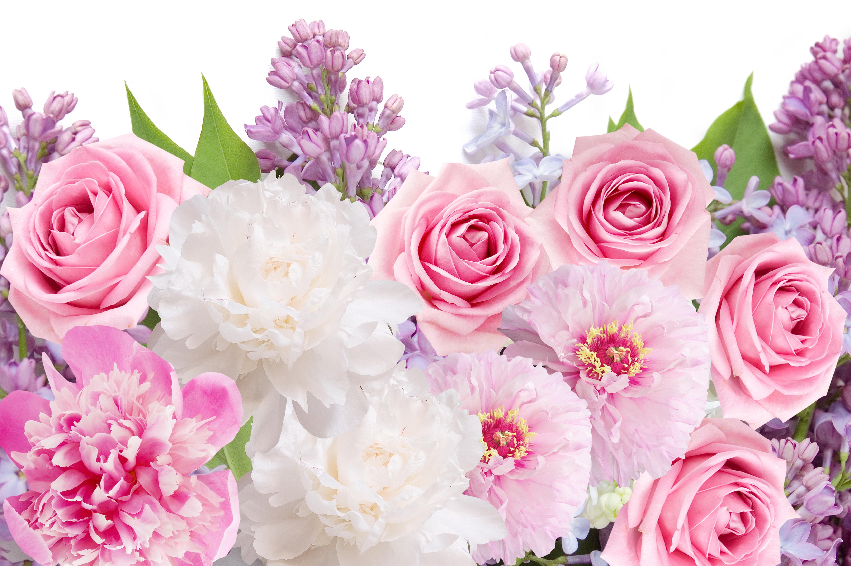 обои для рабочего стола пионы розы № 422787  скачать