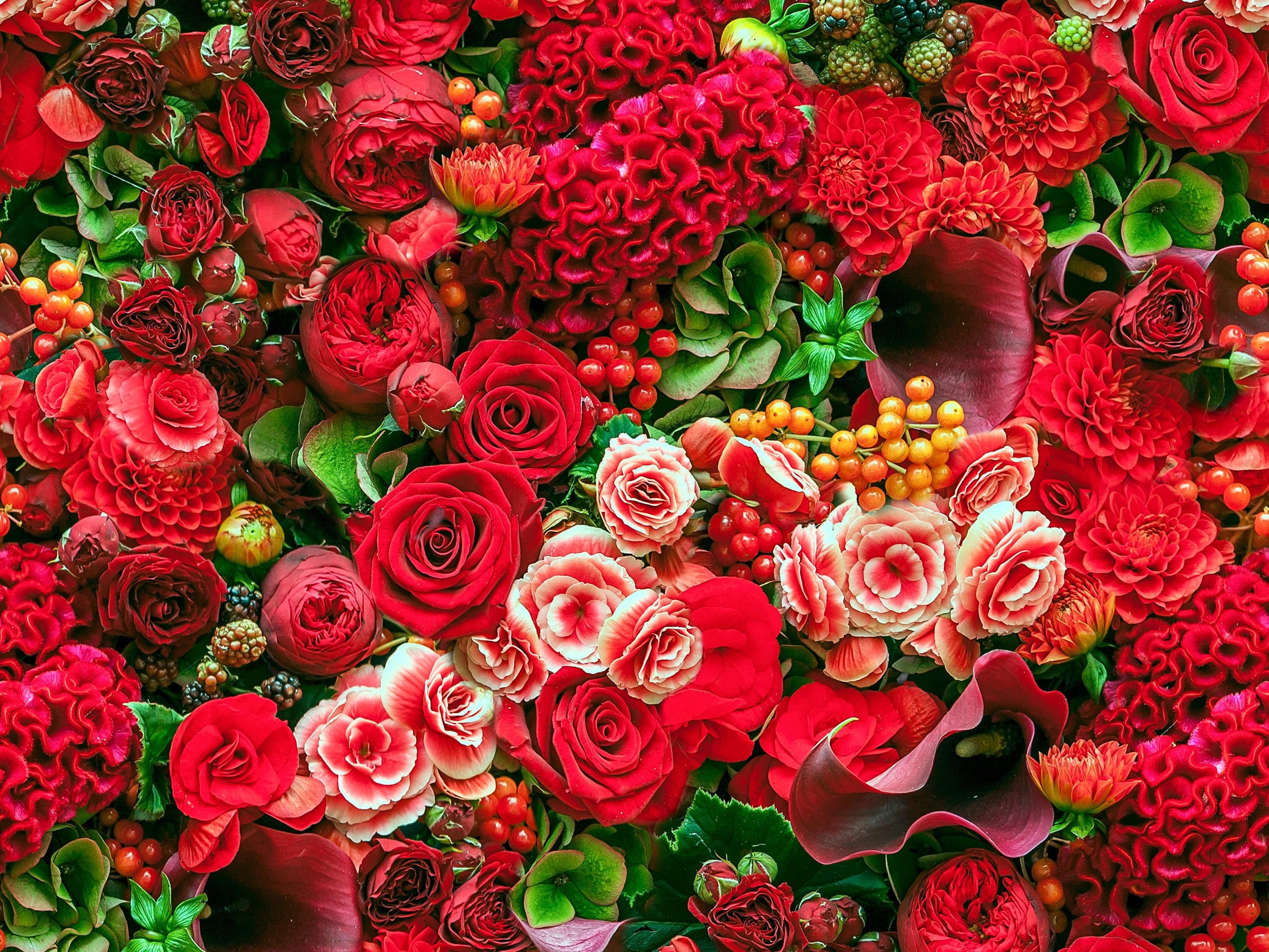 низкие обзор найти картинки цветы возможности