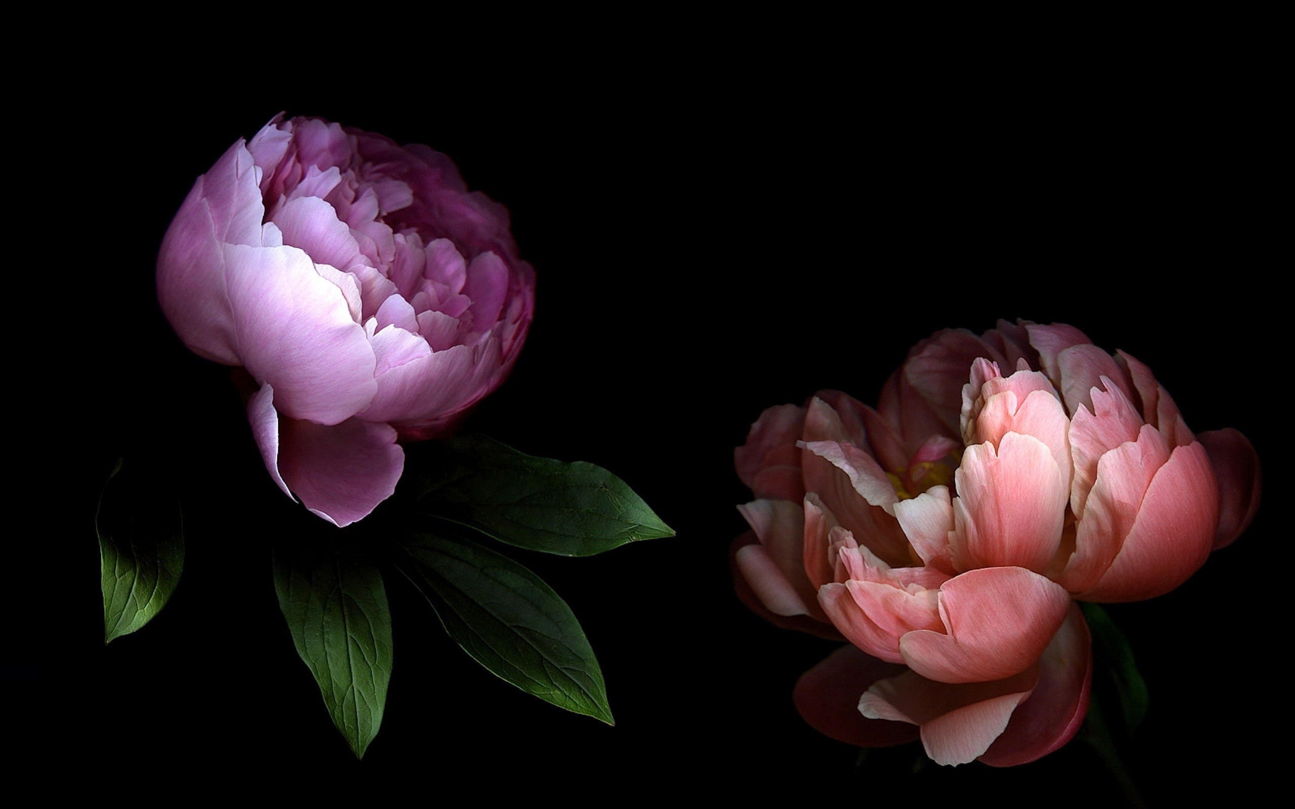 картинки на экран цветы на черном фоне отсылает нас