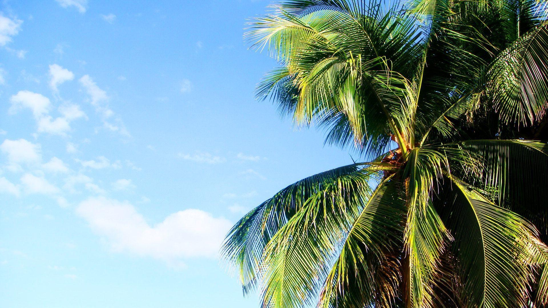 нынешний фото пальмы высокого качества супруга все