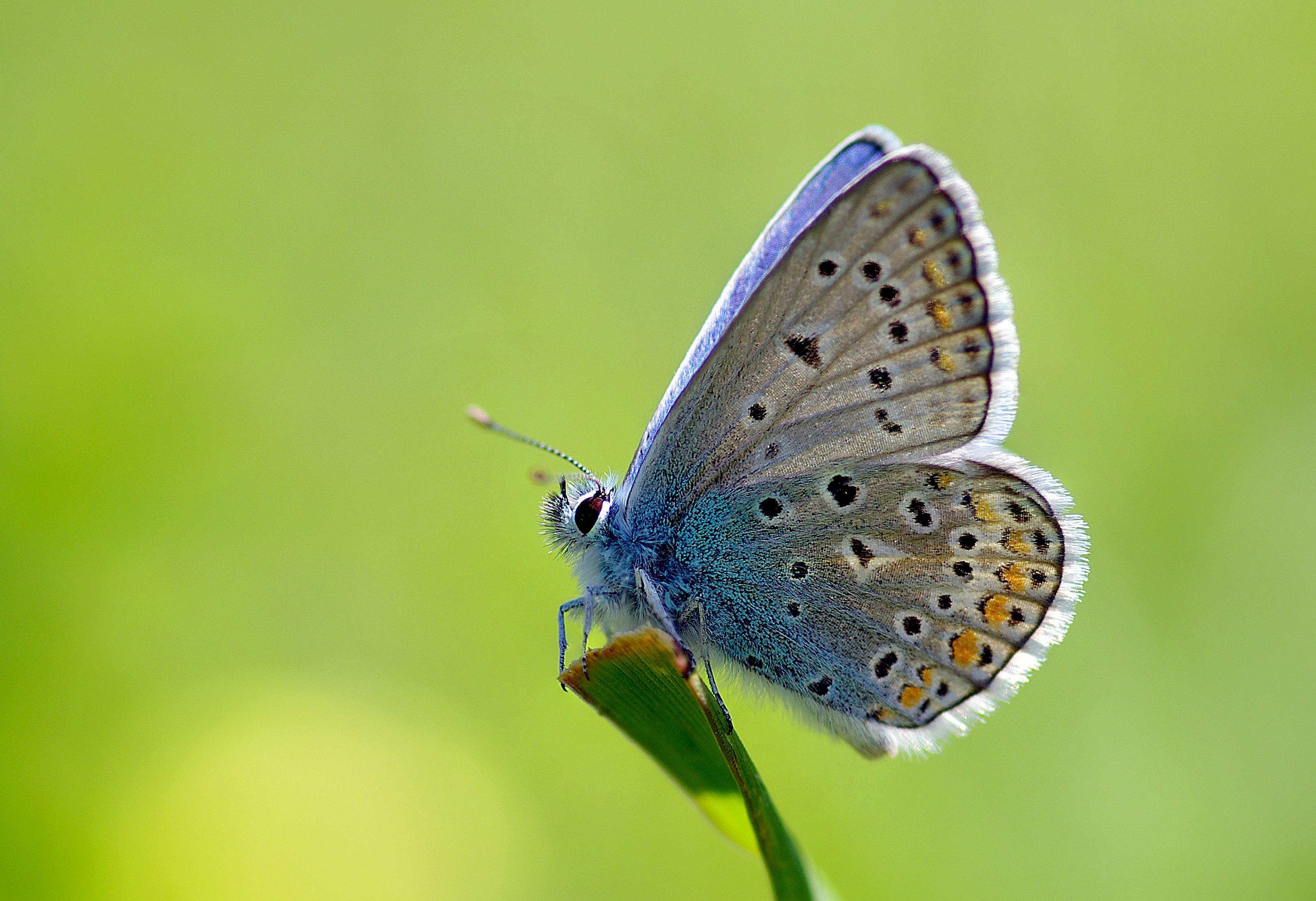 Картинки для стола красивые бабочки