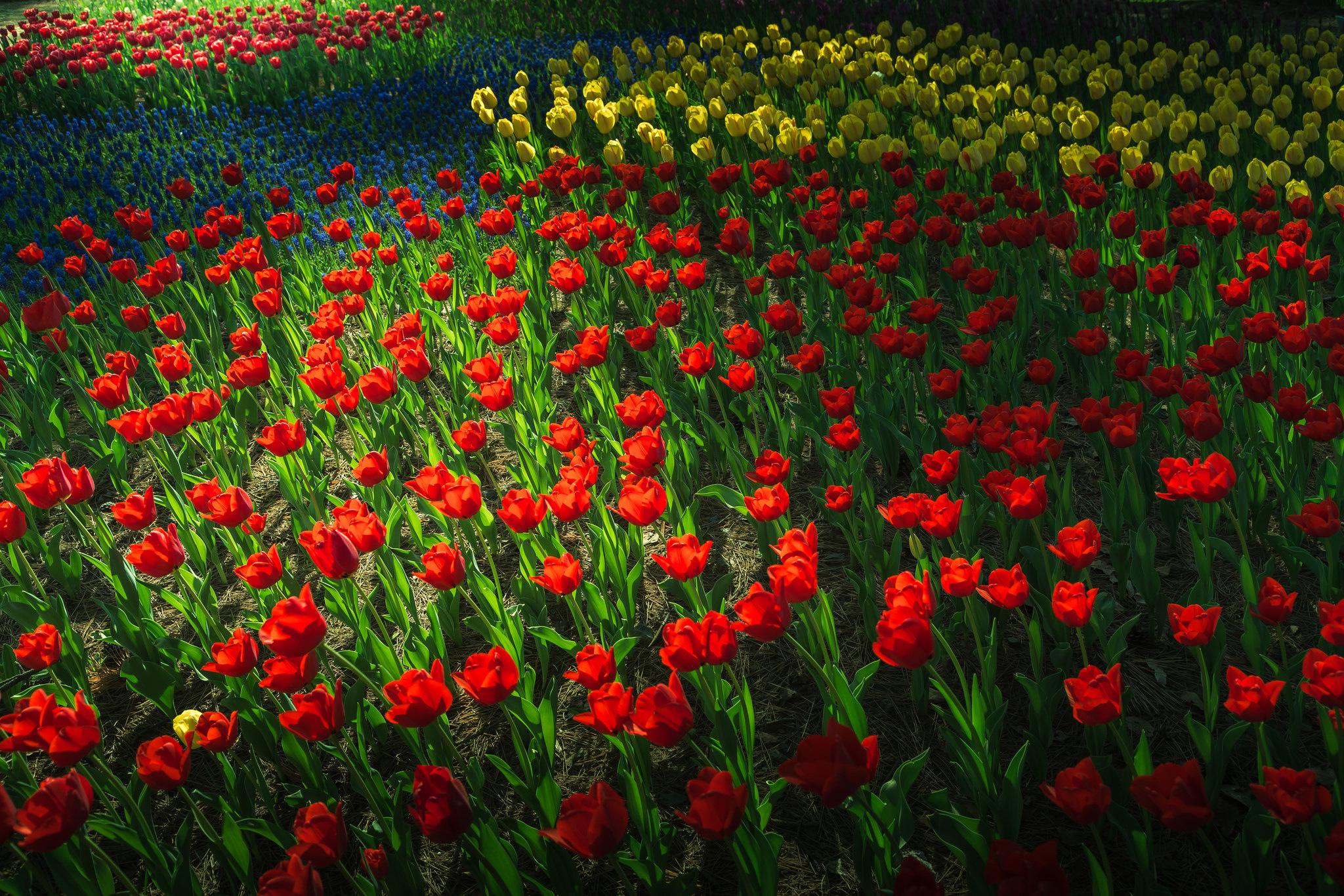 wallpapers blumen park garten fr hling tulpen f r desktop 86575. Black Bedroom Furniture Sets. Home Design Ideas