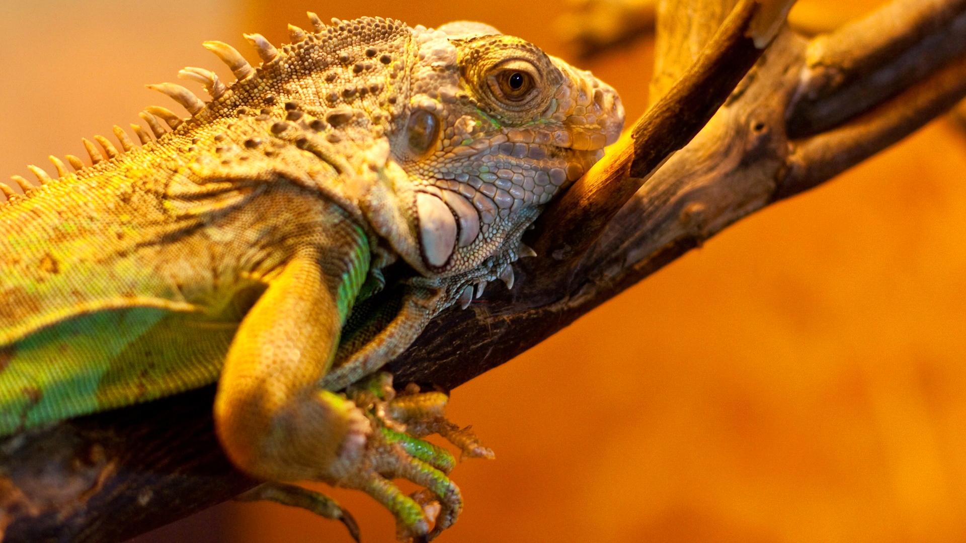 природа животные рептилия  № 235003 без смс