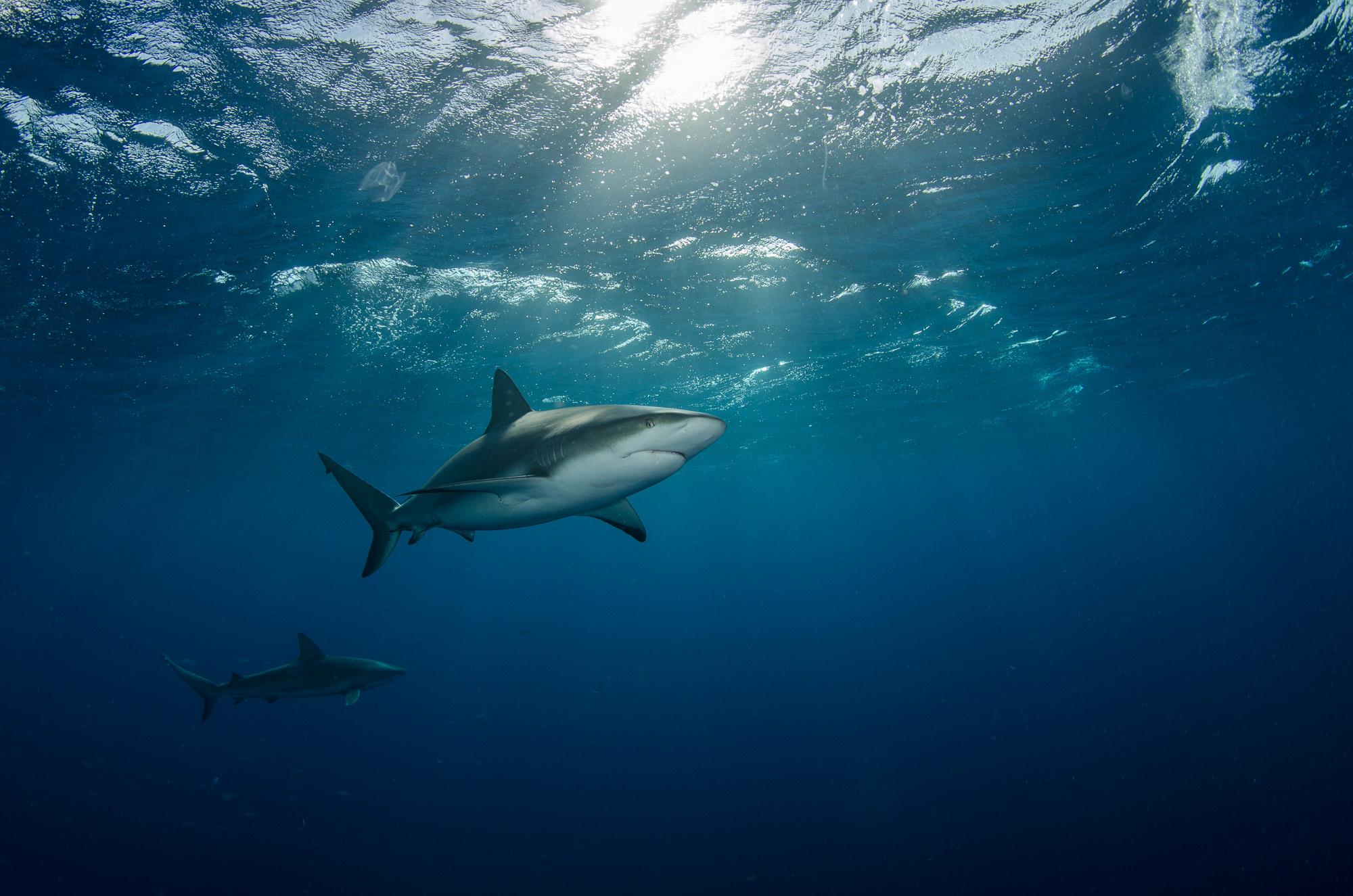 отмечают лучшие картинки акул люди устанавливают