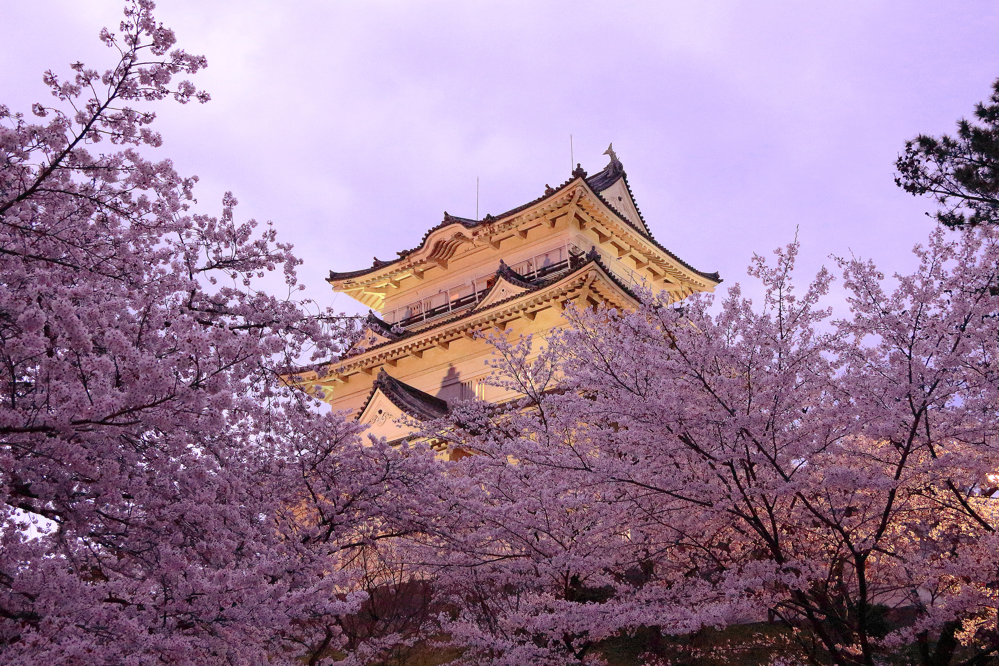 картинка пагода и сакура это