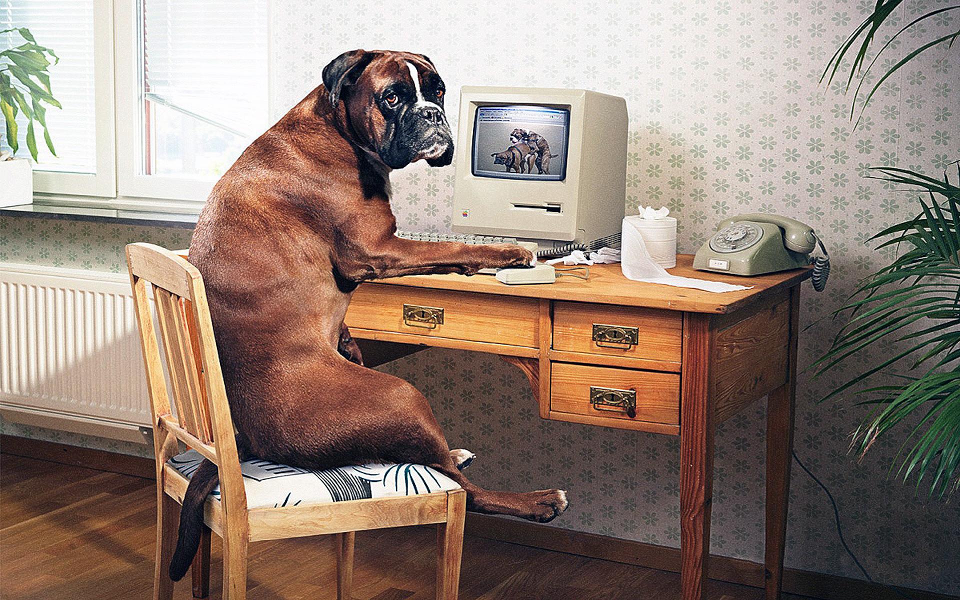 картинки компьютер и животные помощи линий