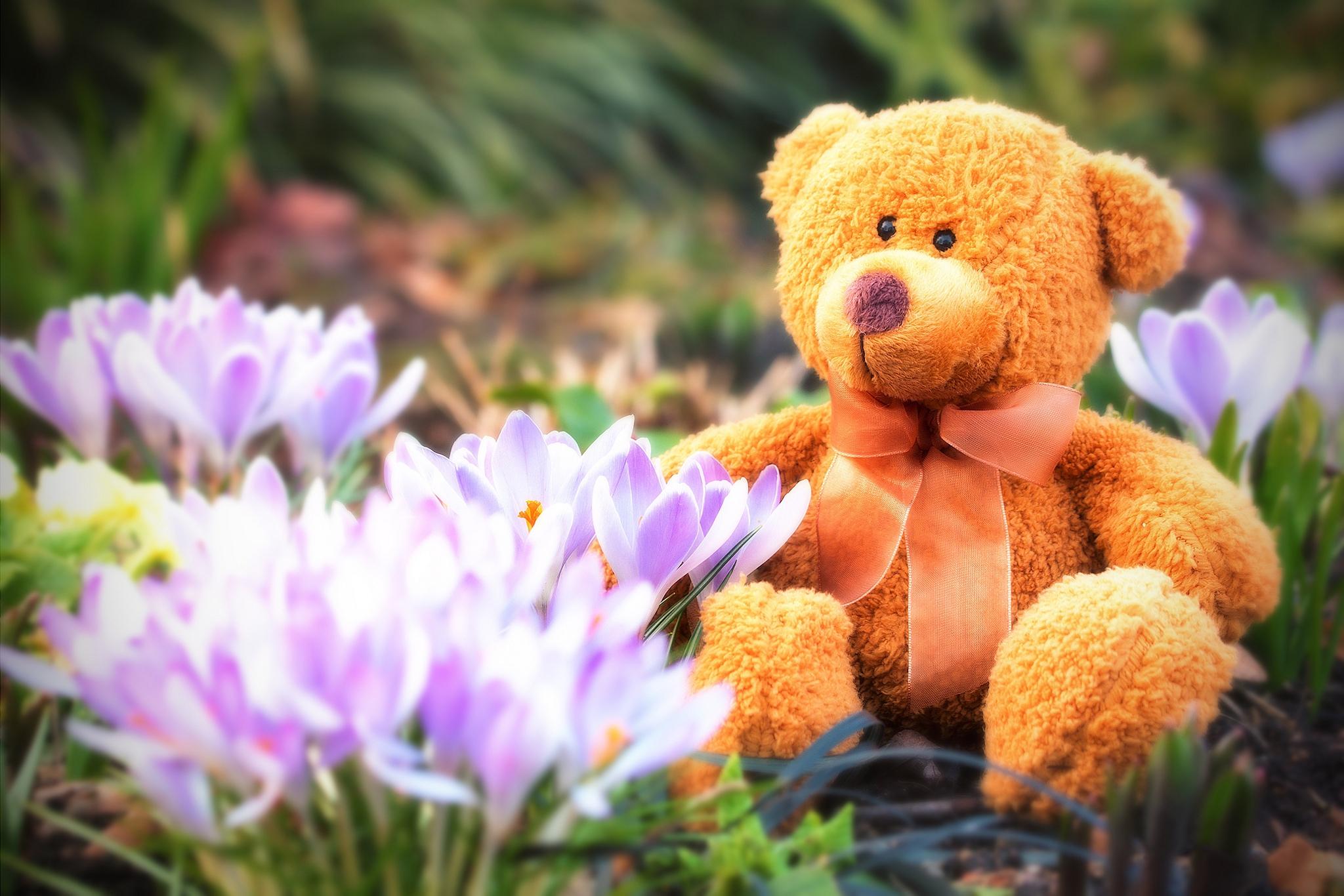картинки цветочки и мишки денди или