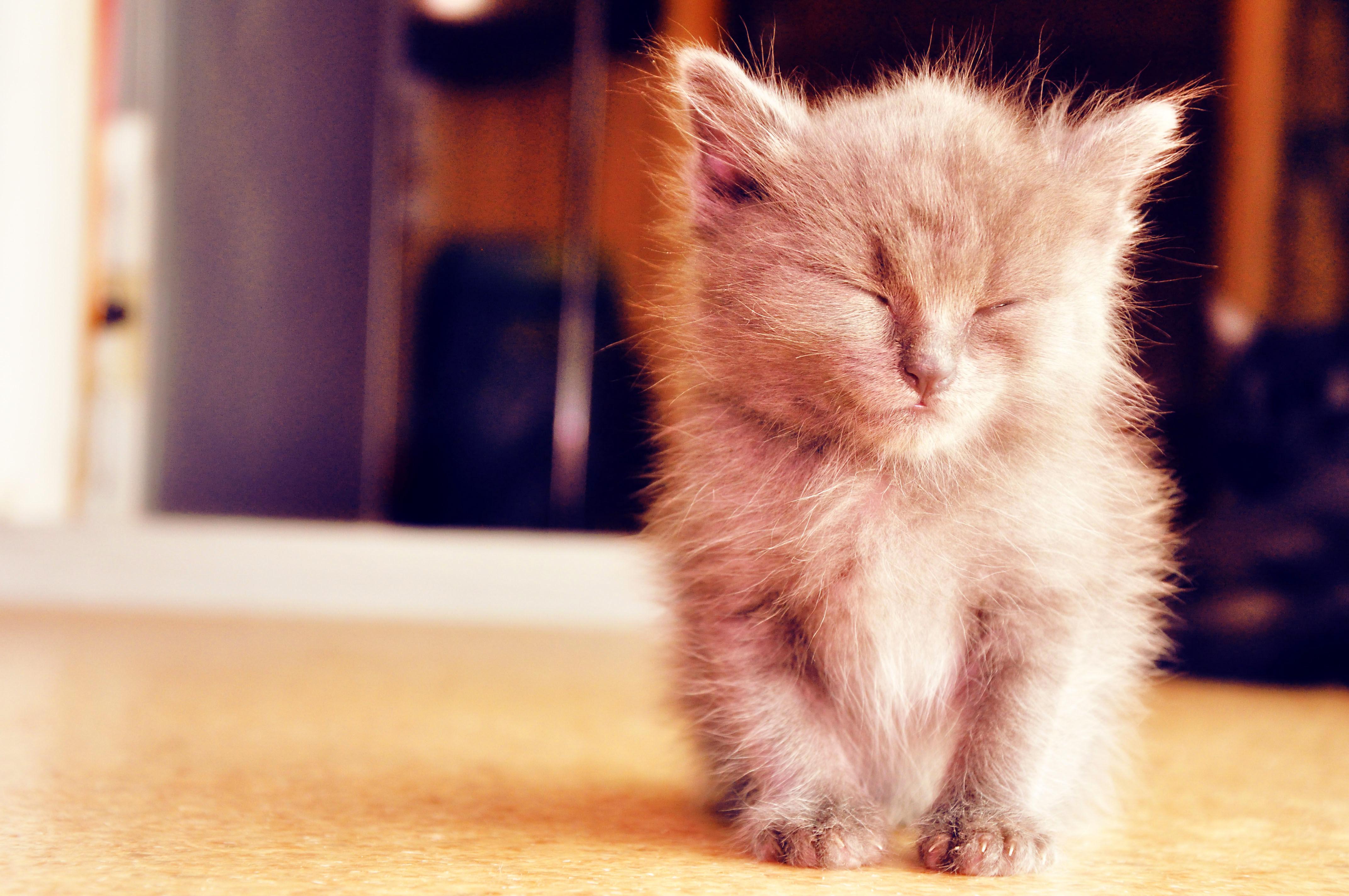 Мой милый котенок картинки