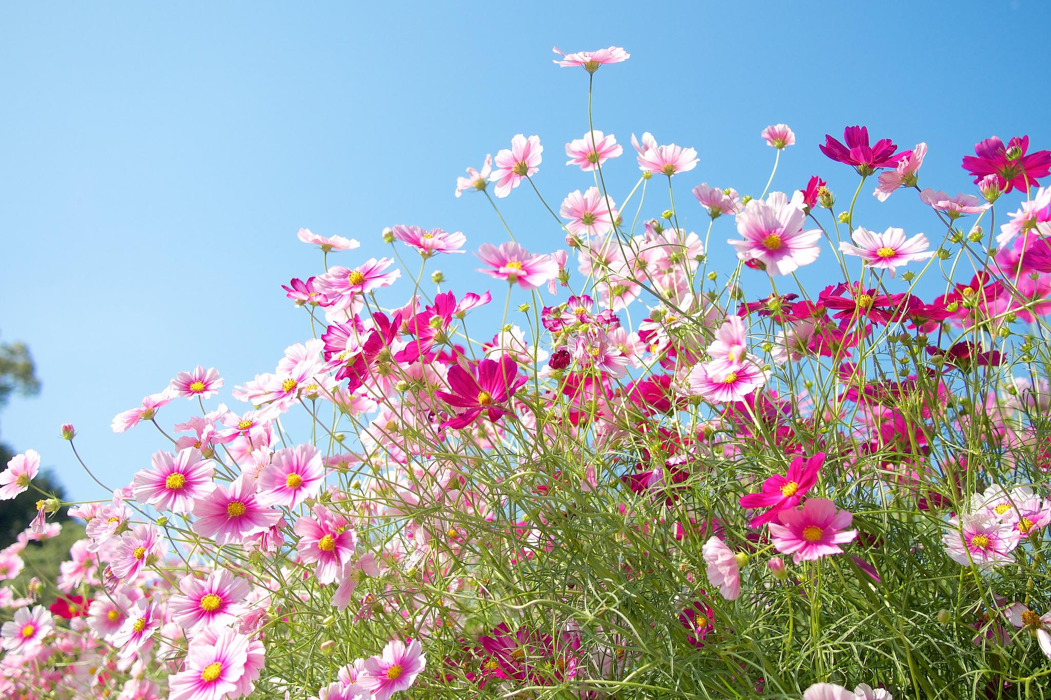полевые цветы большие картинки начали ремонт своей