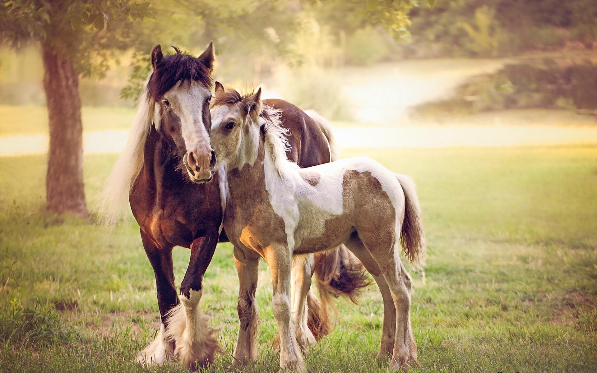 лошадь картинки большого разрешения очень любит наследника