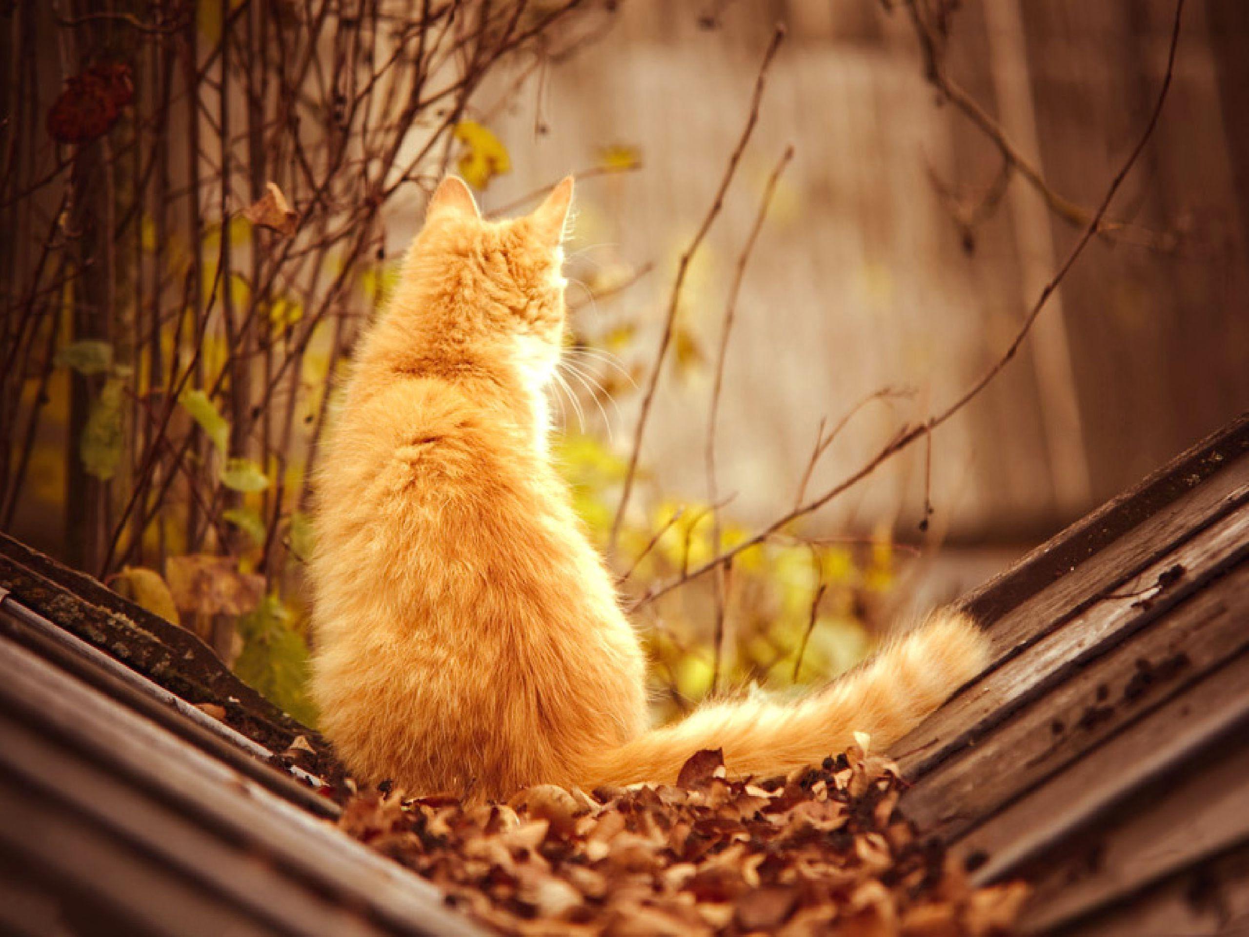 картинки коты осень утро праздники картинки