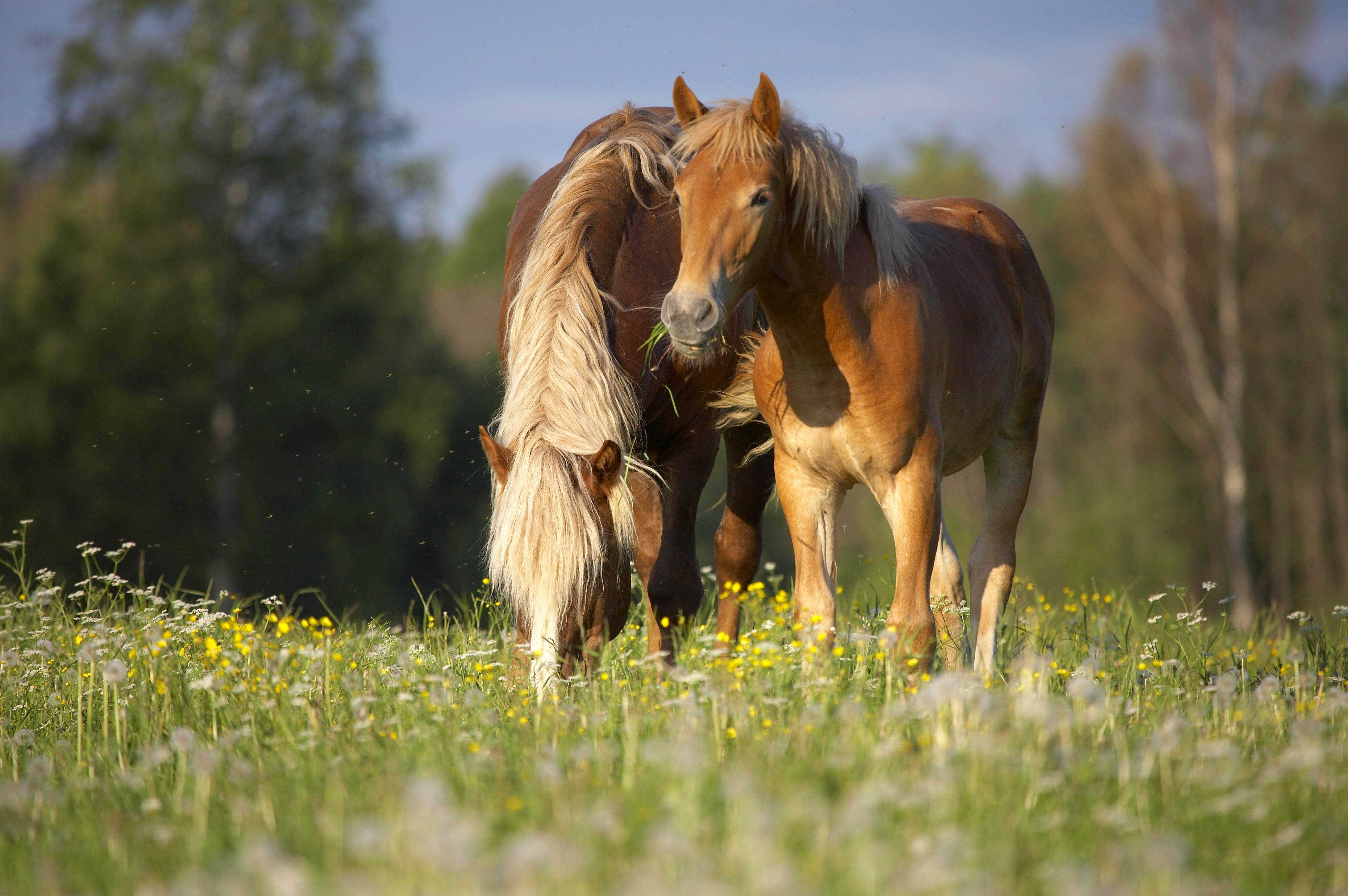 лошадь картинки большого разрешения могут быть проблемы
