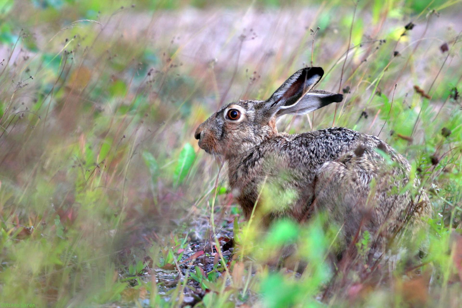 Картинка картинка зайца