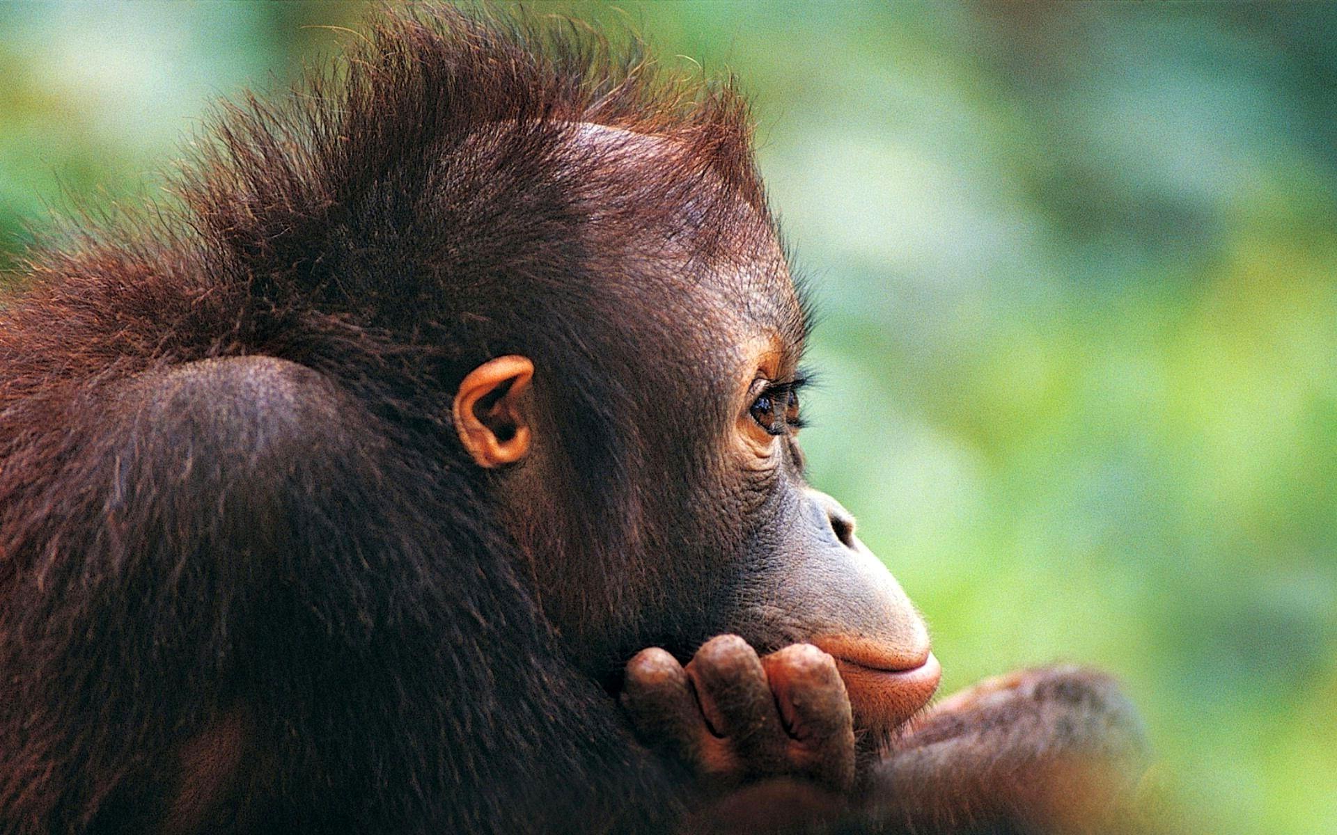 интересные и смешные картинки про животных обоями картинками
